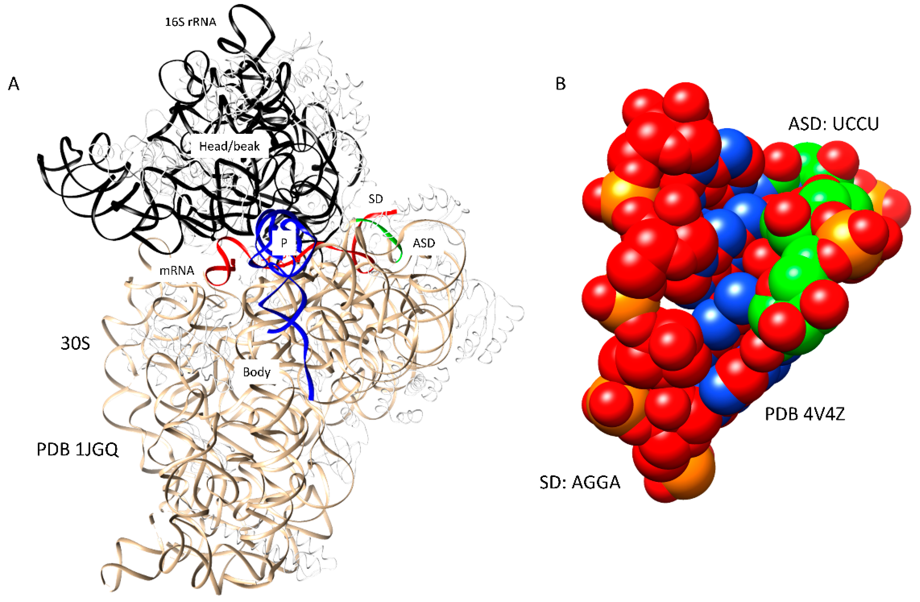 ijms 20 00040 g001 ijms free full text ribosome structure, function, and early