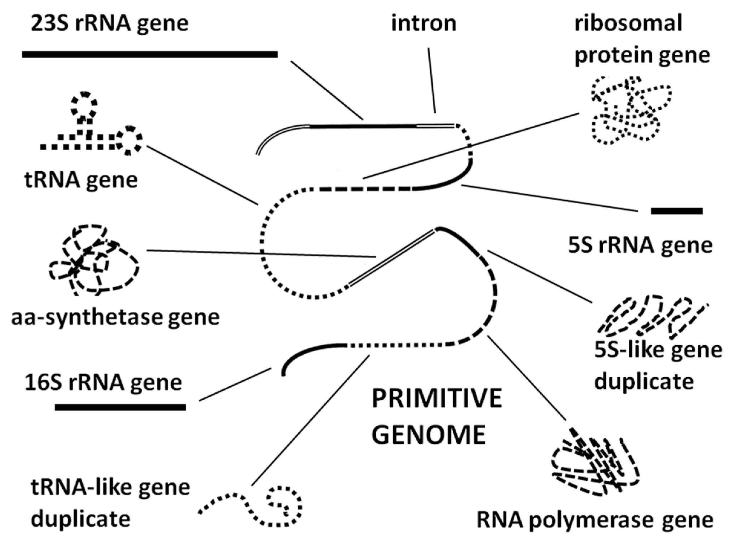 ijms 20 00140 g007 ijms free full text the ribosome as a missing link in prebiotic