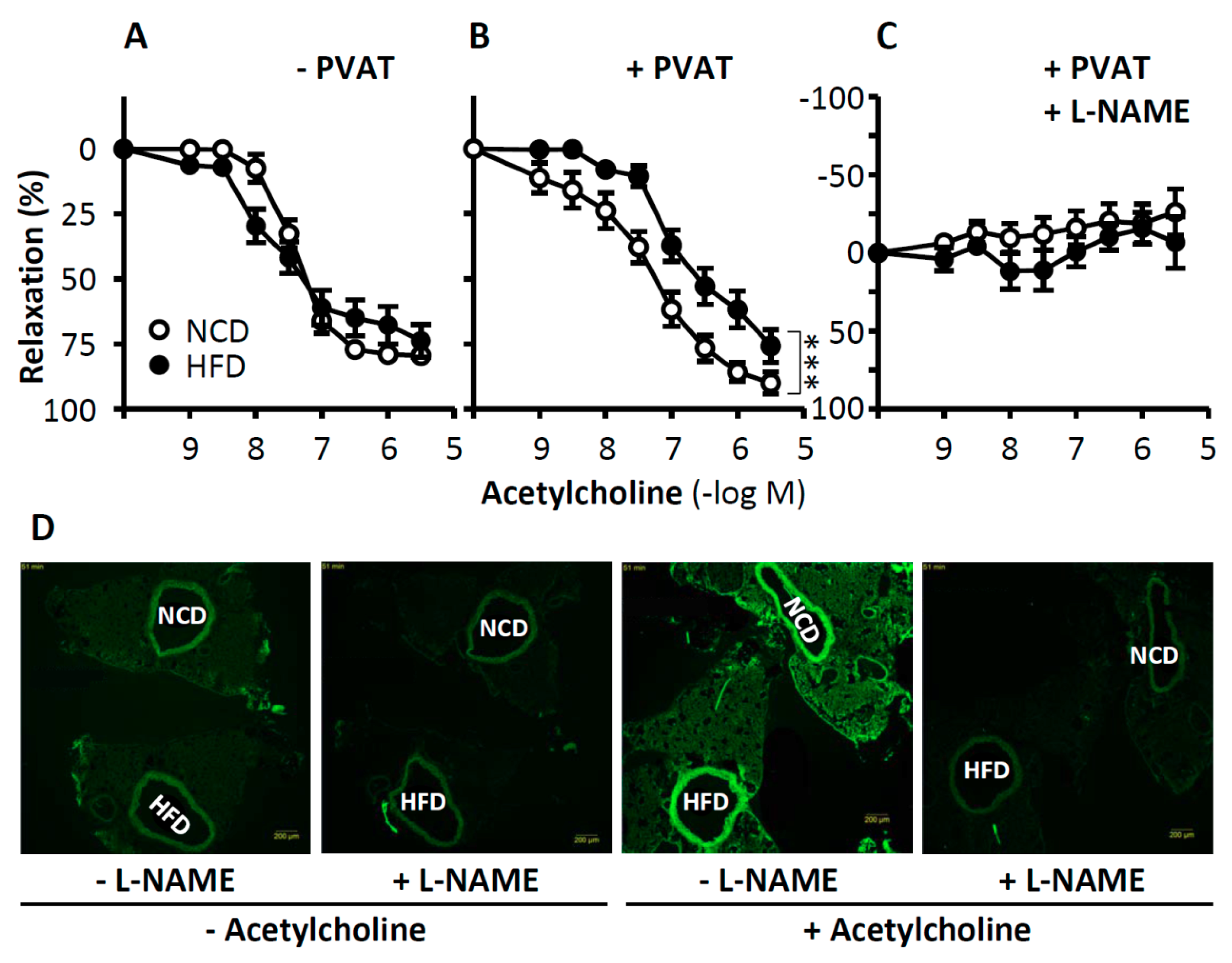 IJMS | Free Full-Text | New Therapeutic Implications of Endothelial
