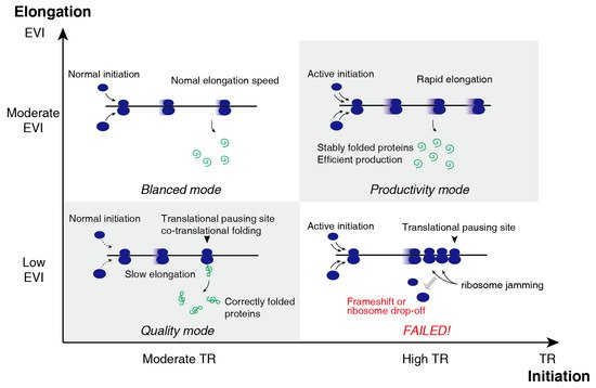 IJMS | Special Issue : Translational Control