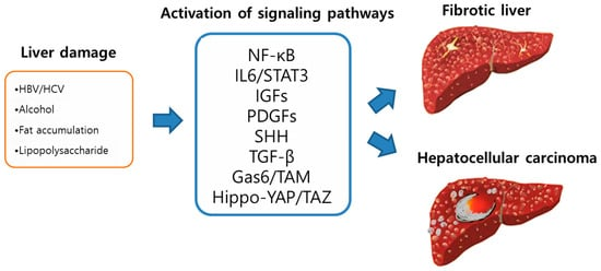 IJMS   Special Issue : Links between Fibrogenesis and Cancer