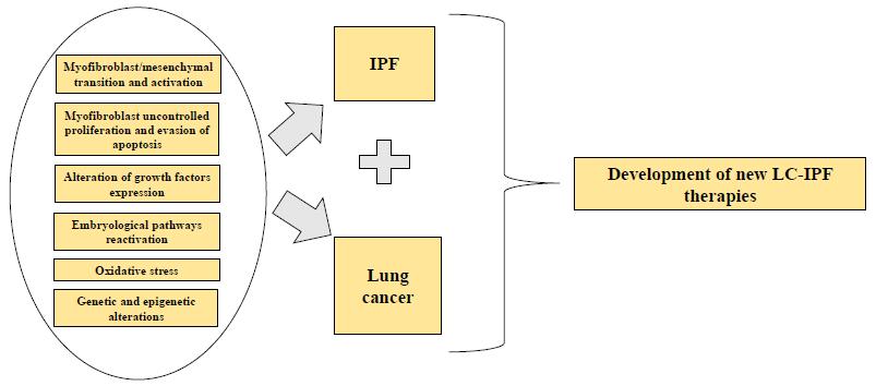 IJMS   Free Full-Text   Idiopathic Pulmonary Fibrosis and