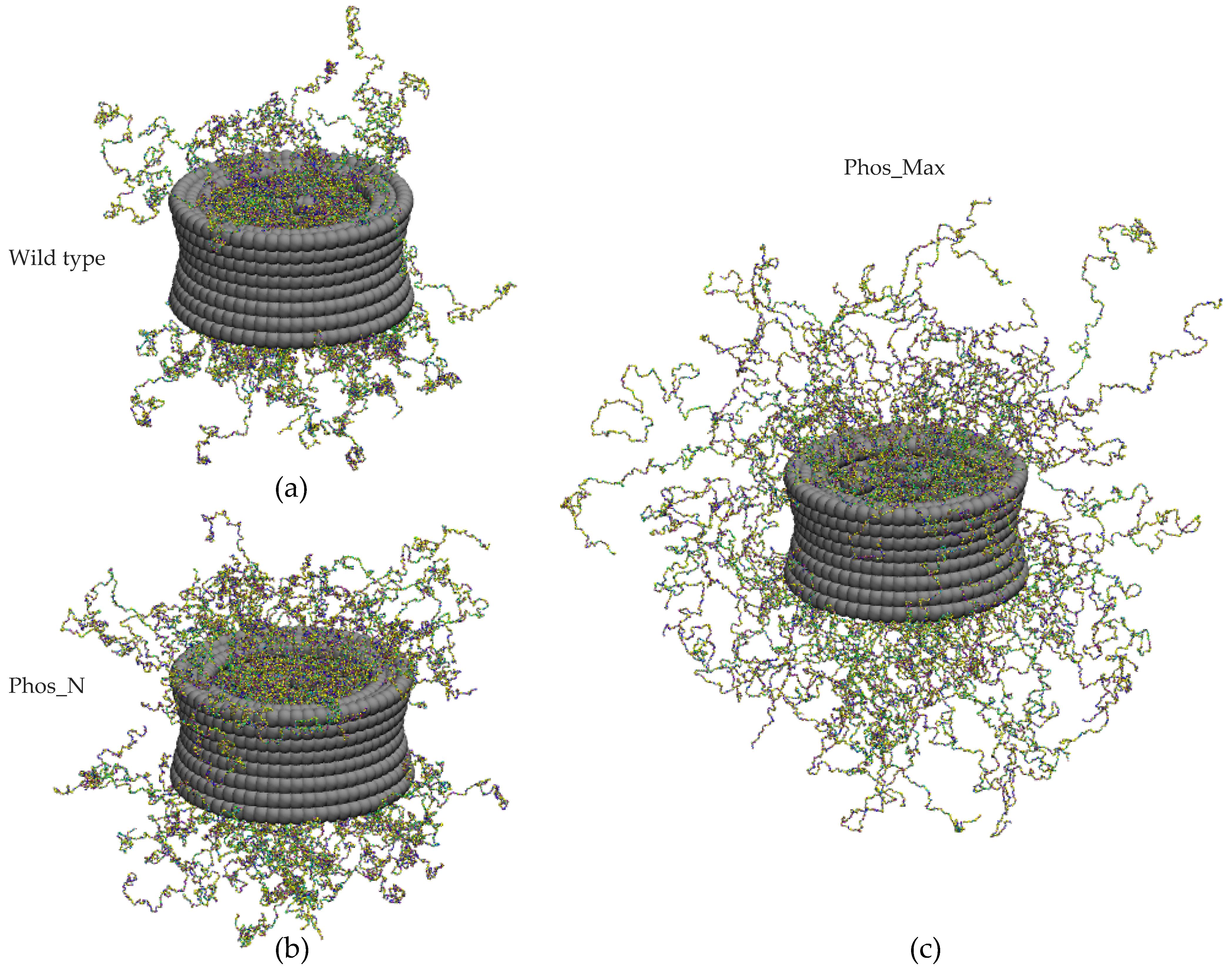 Ijms Free Full Text The Effect Of Fg Nup Phosphorylation On Npc Selectivity A One Bead Per Amino Acid Molecular Dynamics Study
