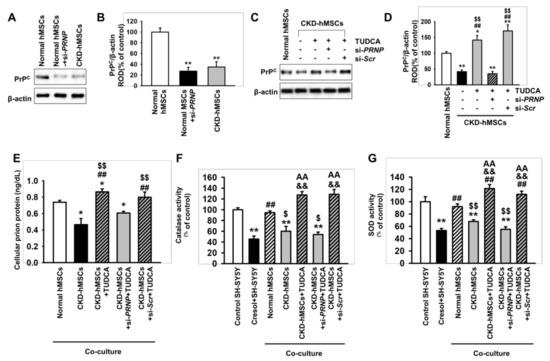 IJMS   Free Full-Text   TUDCA-Treated Mesenchymal Stem Cells Protect