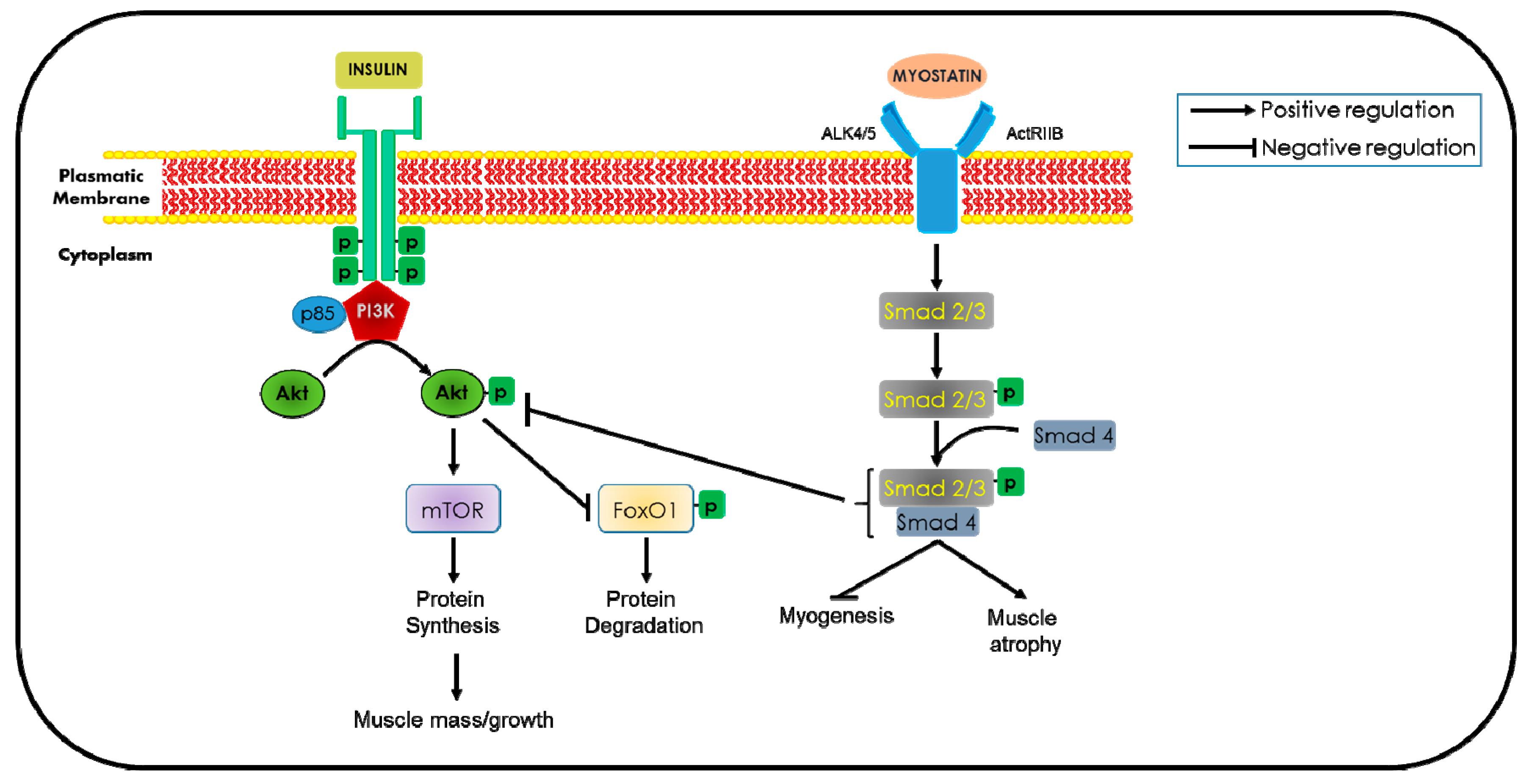 IJMS | Free Full-Text | Mechanisms Underlying Metabolic ...