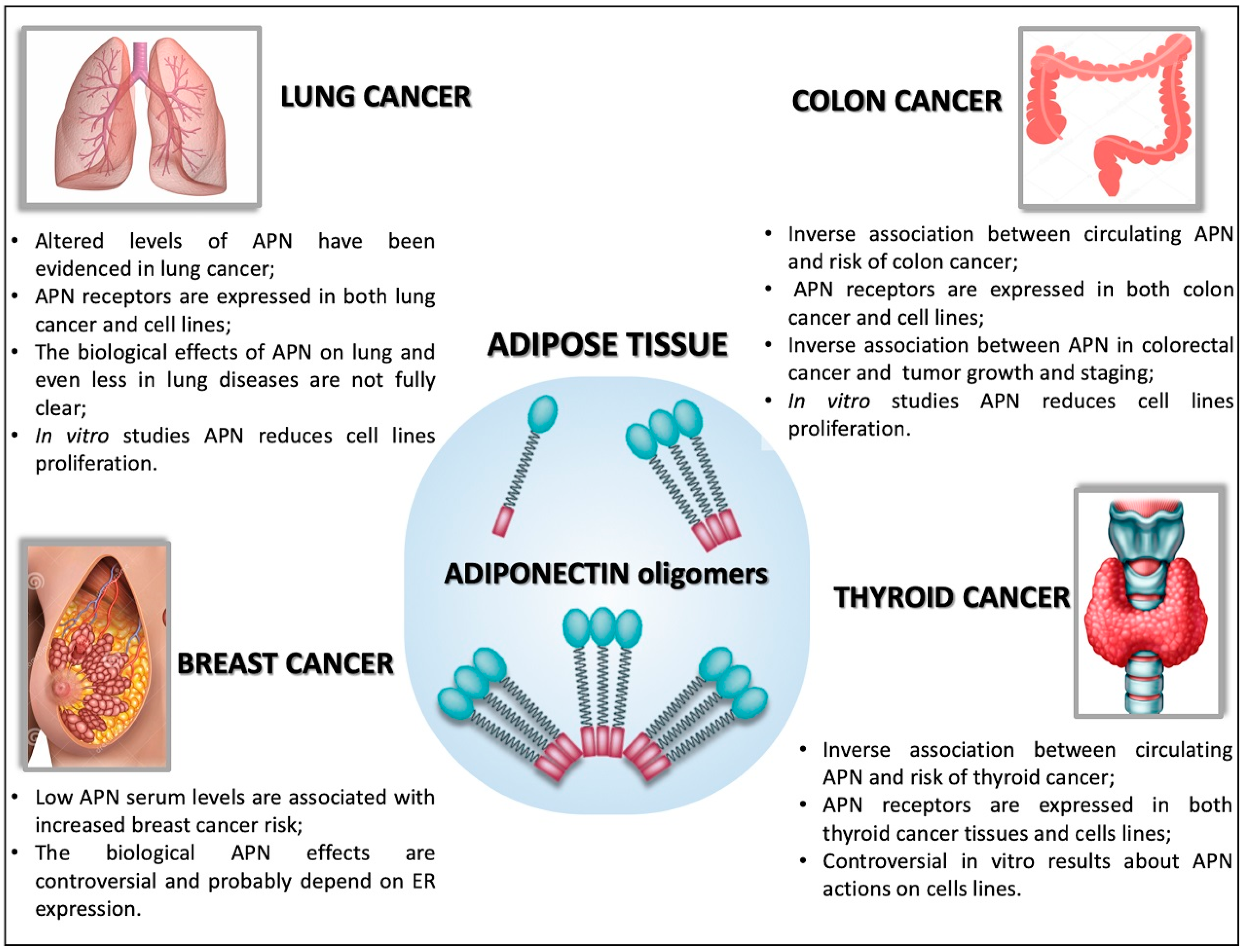 Ijms Free Full Text Adiponectin As Link Factor Between Adipose Tissue And Cancer Html