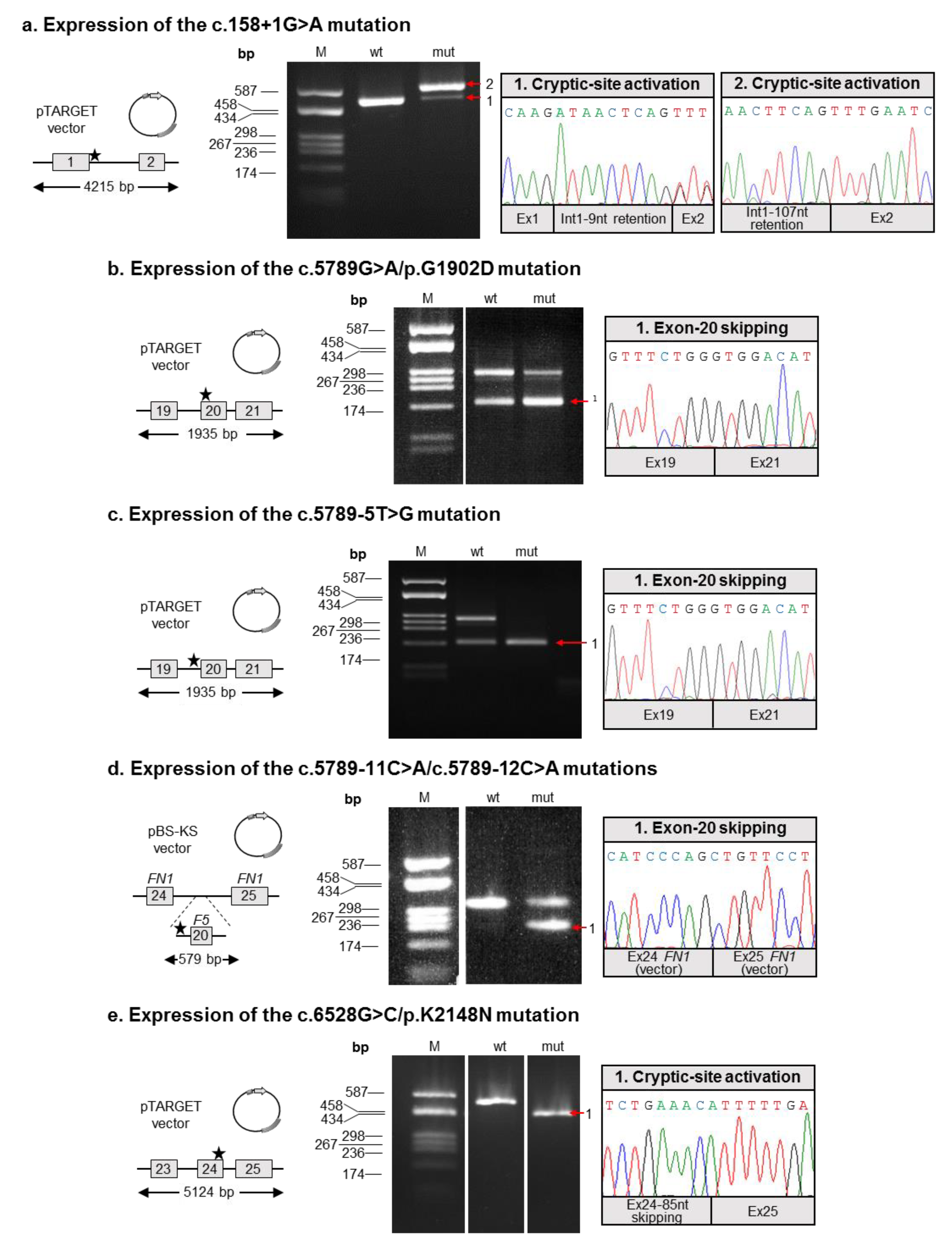 Stratagene Vs Genetic Genie