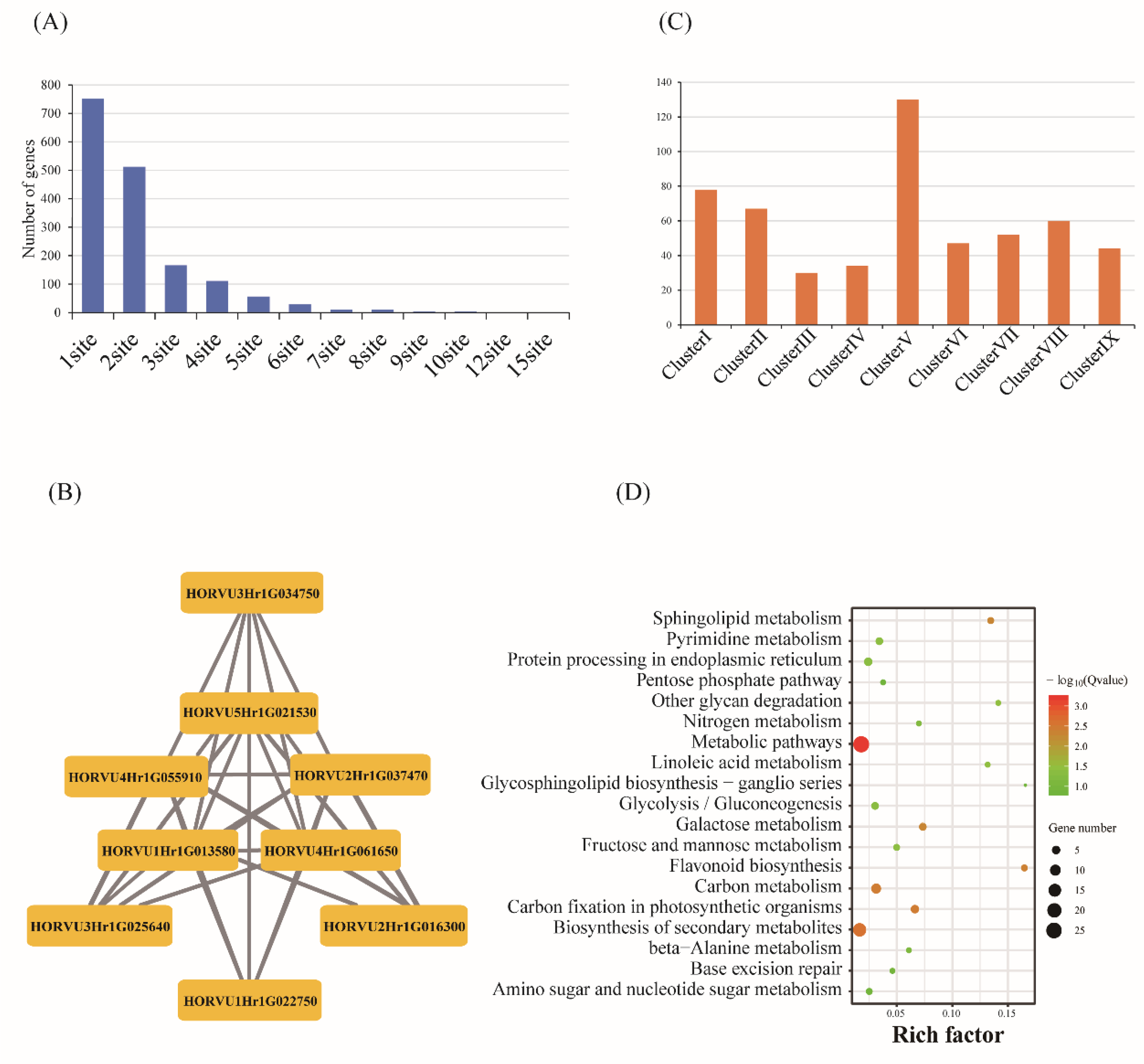 IJMS | Free Full-Text | Transcriptional Dynamics of Grain