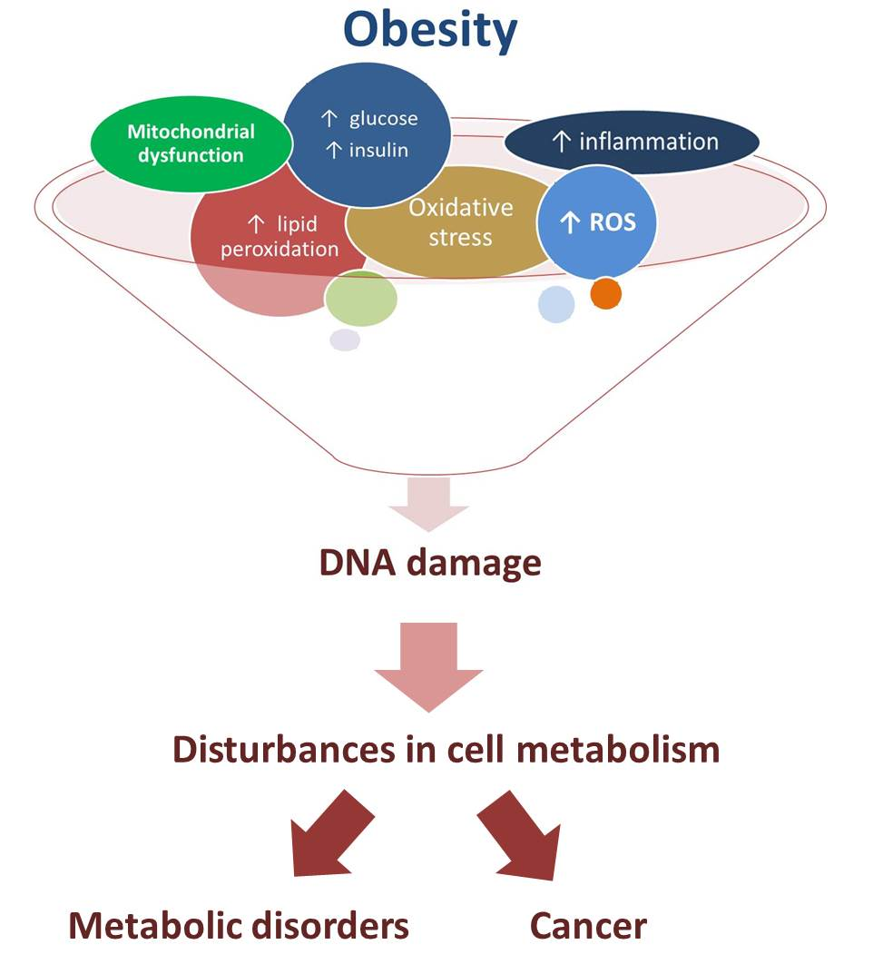 Ijms Free Full Text Obesity Dna Damage And Development Of Obesity Related Diseases