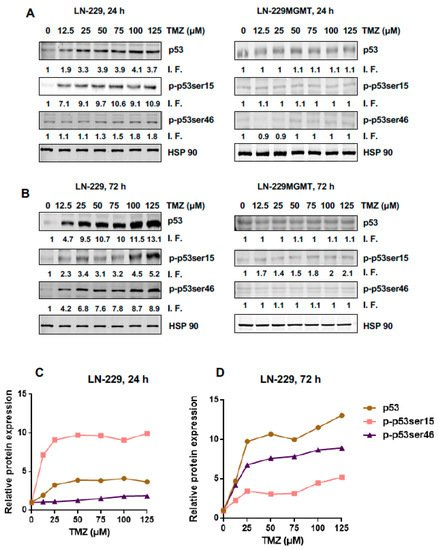IJMS Free Full Text Are There Thresholds In Glioblastoma