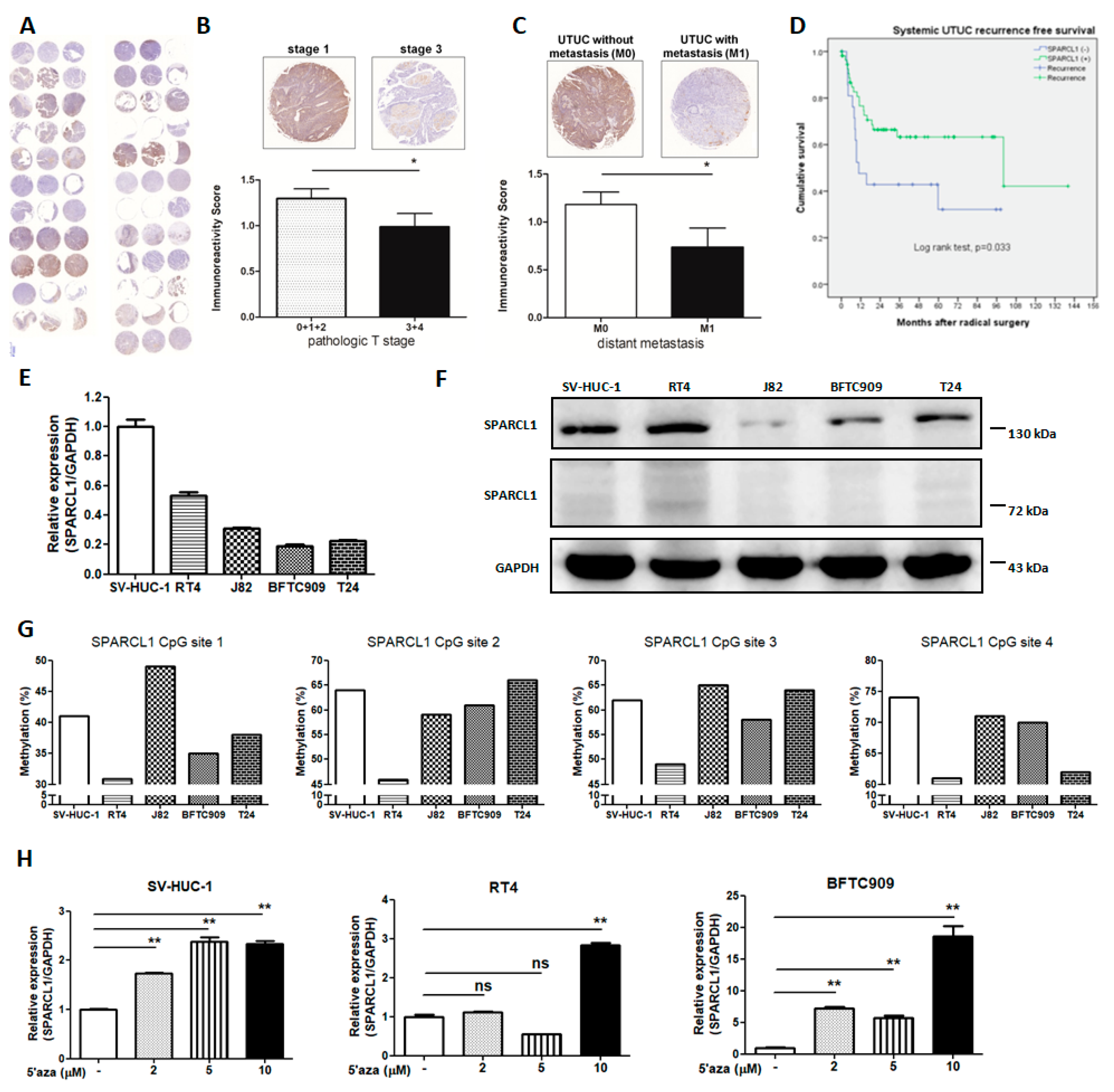 IJMS | Free Full-Text | Methylation of SPARCL1 Is Associated
