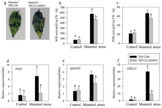 IJMS   Special Issue : Salinity Tolerance in Plants