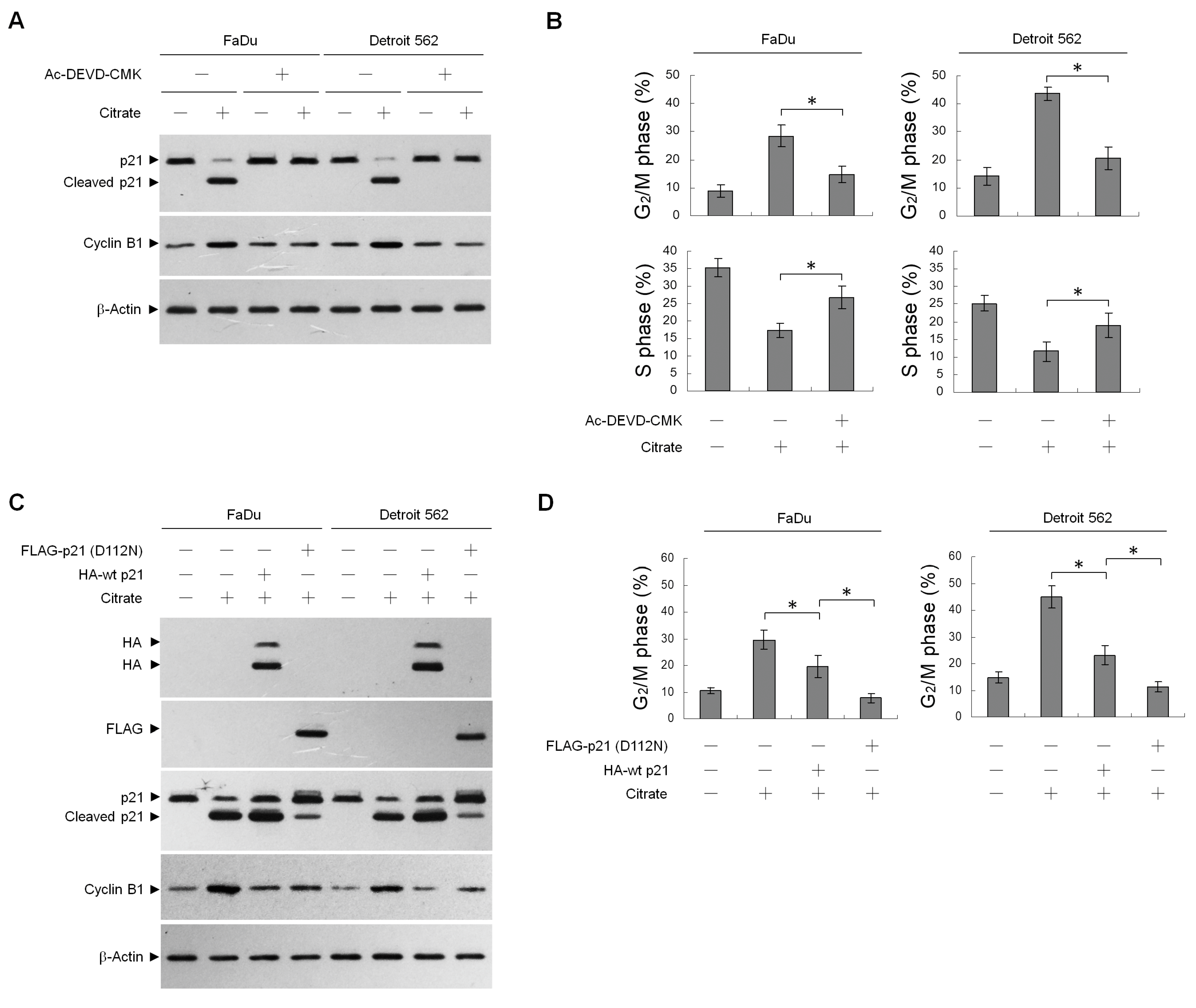 IJMS | Free Full-Text | Citrate-Induced p85α–PTEN Complex