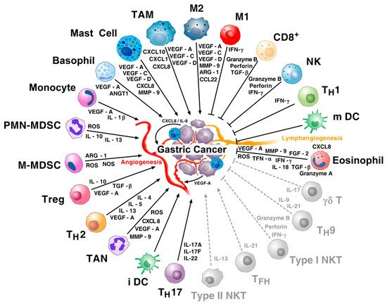 Gastric Carcinoma: Morphologic Classifications and