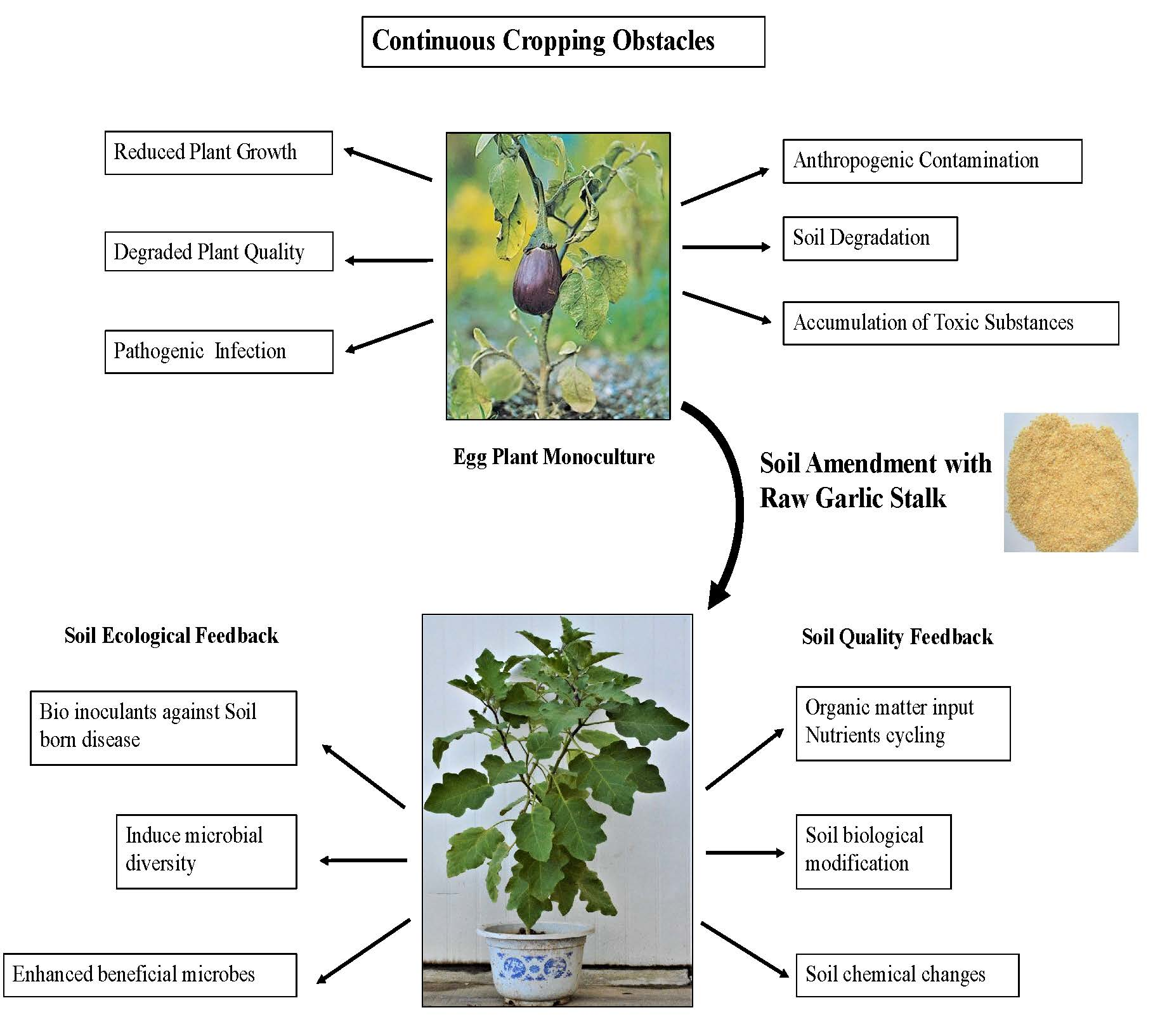 Ijms Free Full Text Changes In The Soil Microbiome In Eggplant Monoculture Revealed By High Throughput Illumina Miseq Sequencing As Influenced By Raw Garlic Stalk Amendment Html