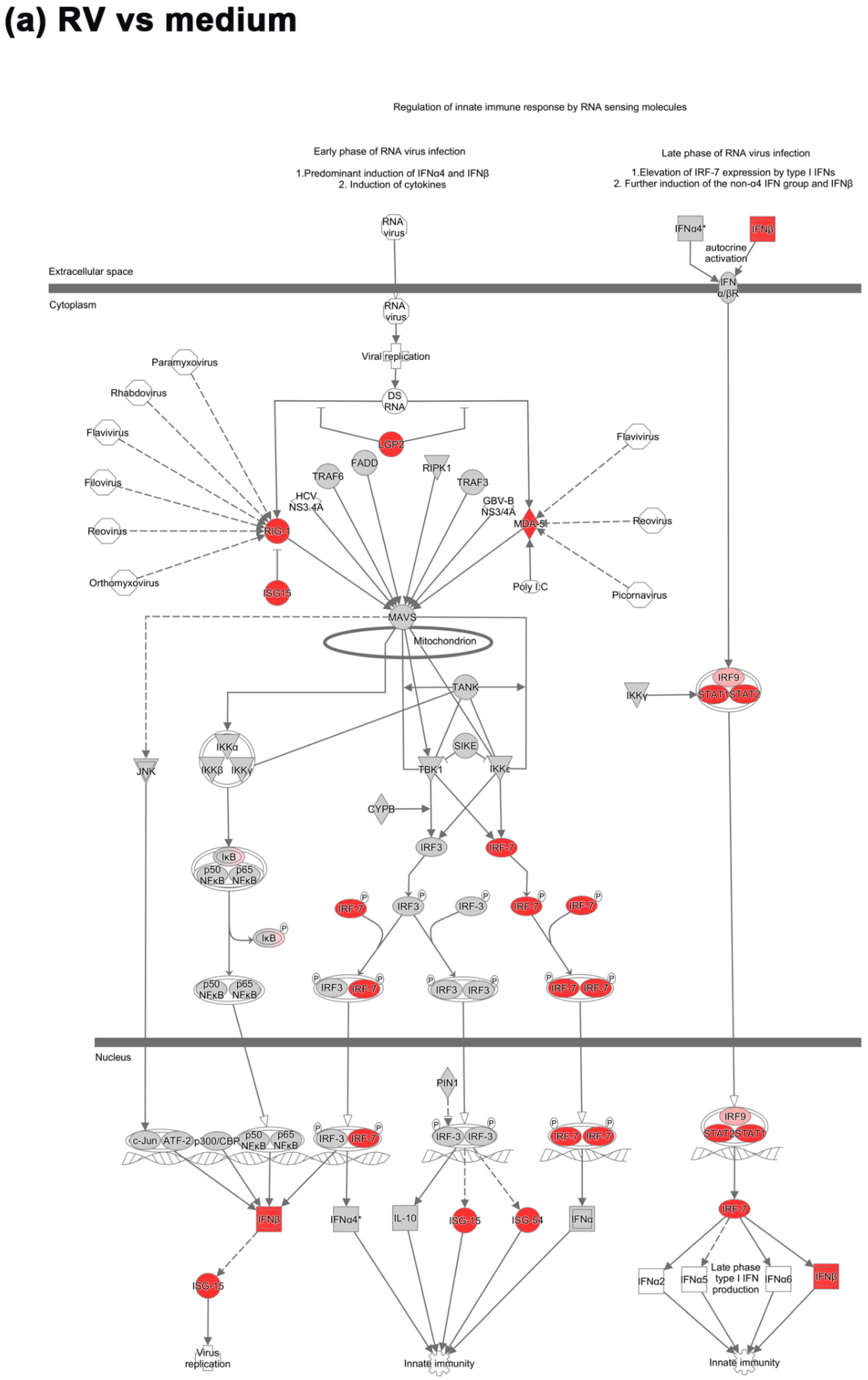 IJMS | Free Full-Text | Transcriptomic Analysis Reveals