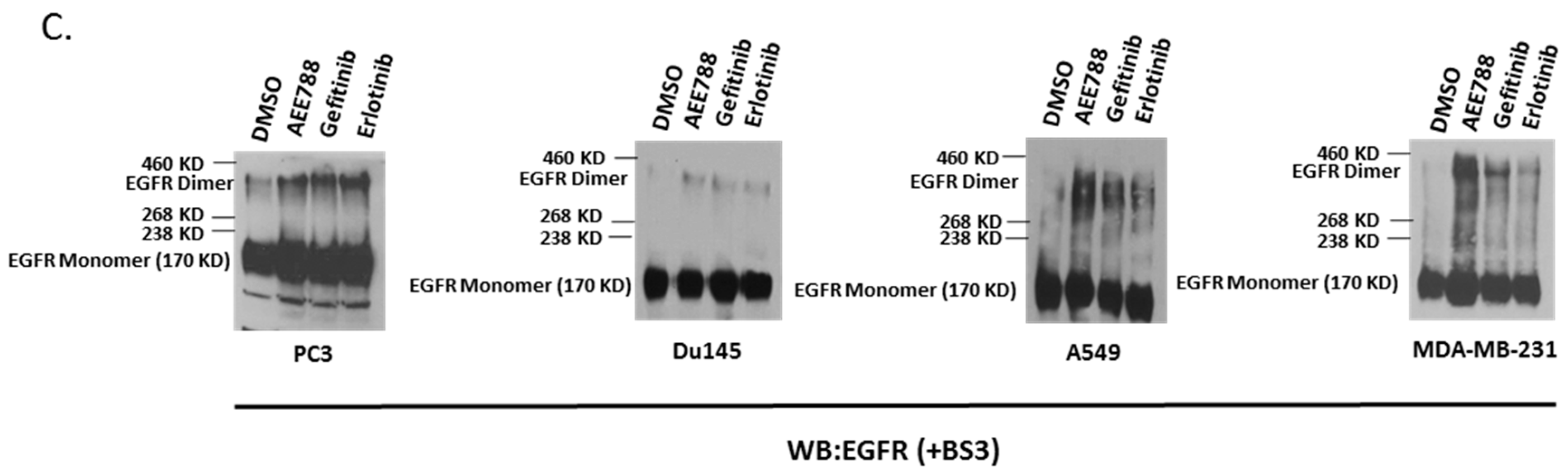 IJMS | Free Full-Text | Kinase-Inactivated EGFR Is Required