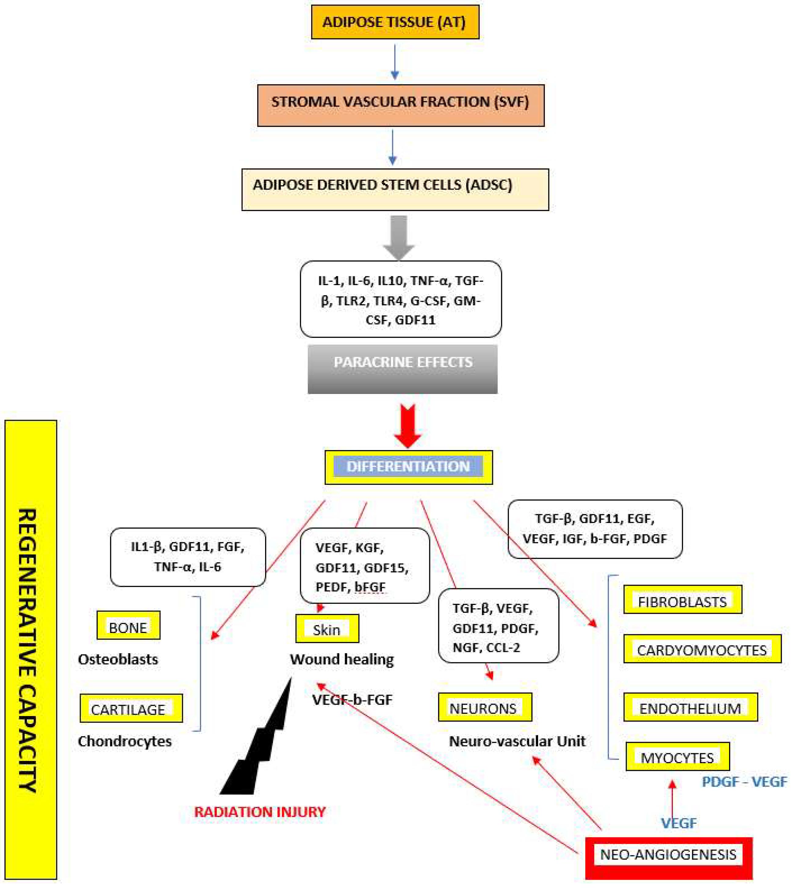 IJMS | Free Full-Text | Regenerative Capacity of Adipose