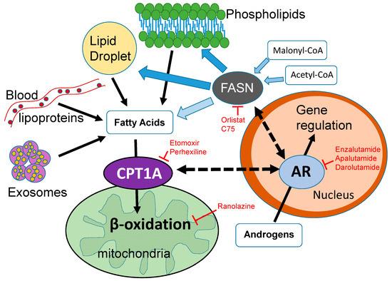 b1b58c54b International Journal of Molecular Sciences