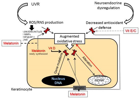 IJMS | Special Issue : Molecular Mechanisms of Skin Aging