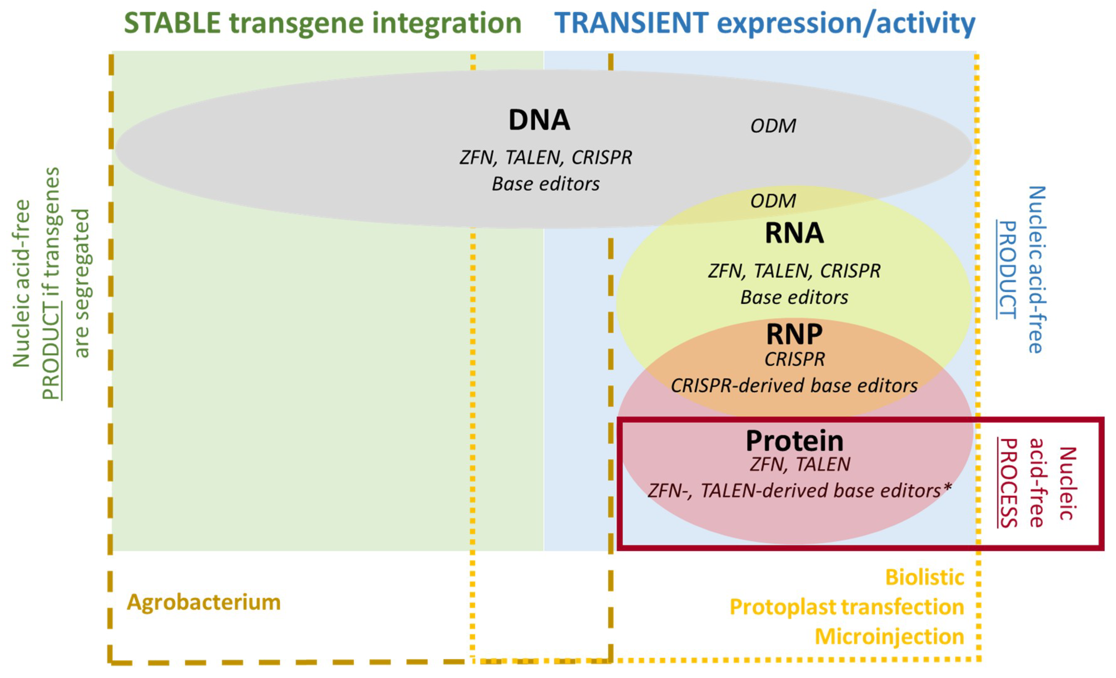 IJMS | Free Full-Text | Genome Editing in Agriculture: Technical and