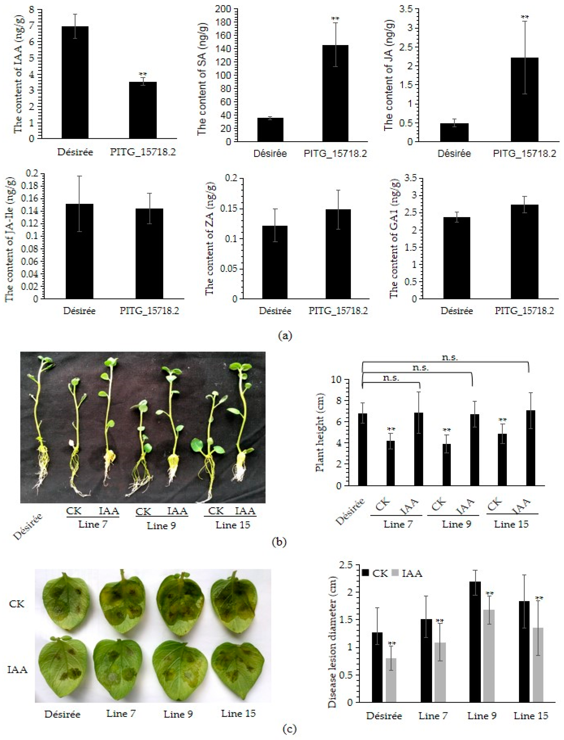 IJMS | Free Full-Text | Transgenic RXLR Effector PITG_15718