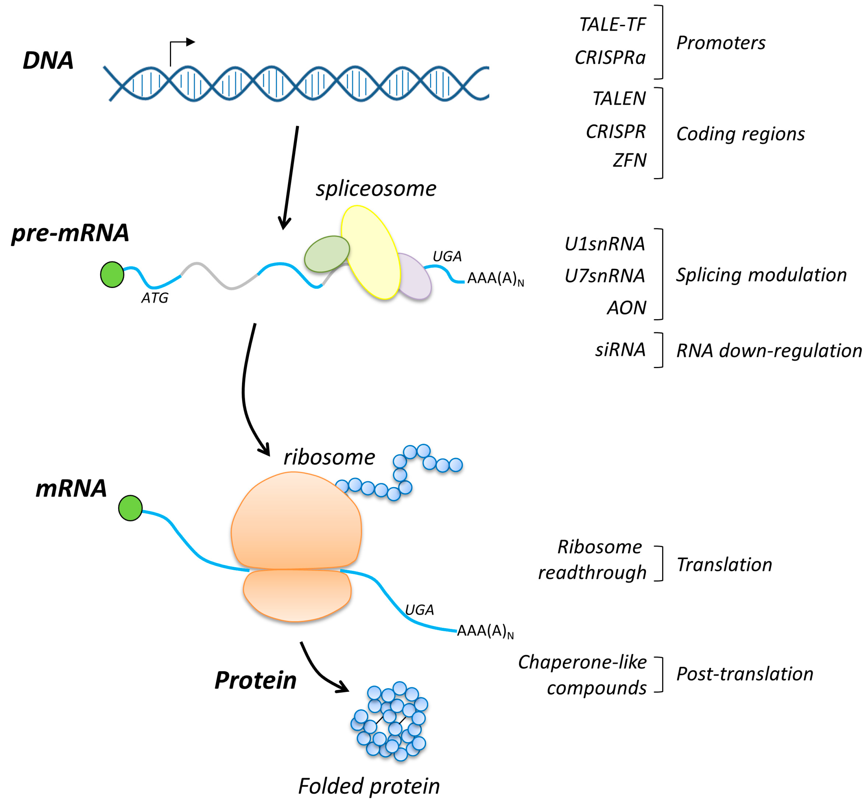 ぜいたく Dna Rna Proteins - ガジャフマティヨ