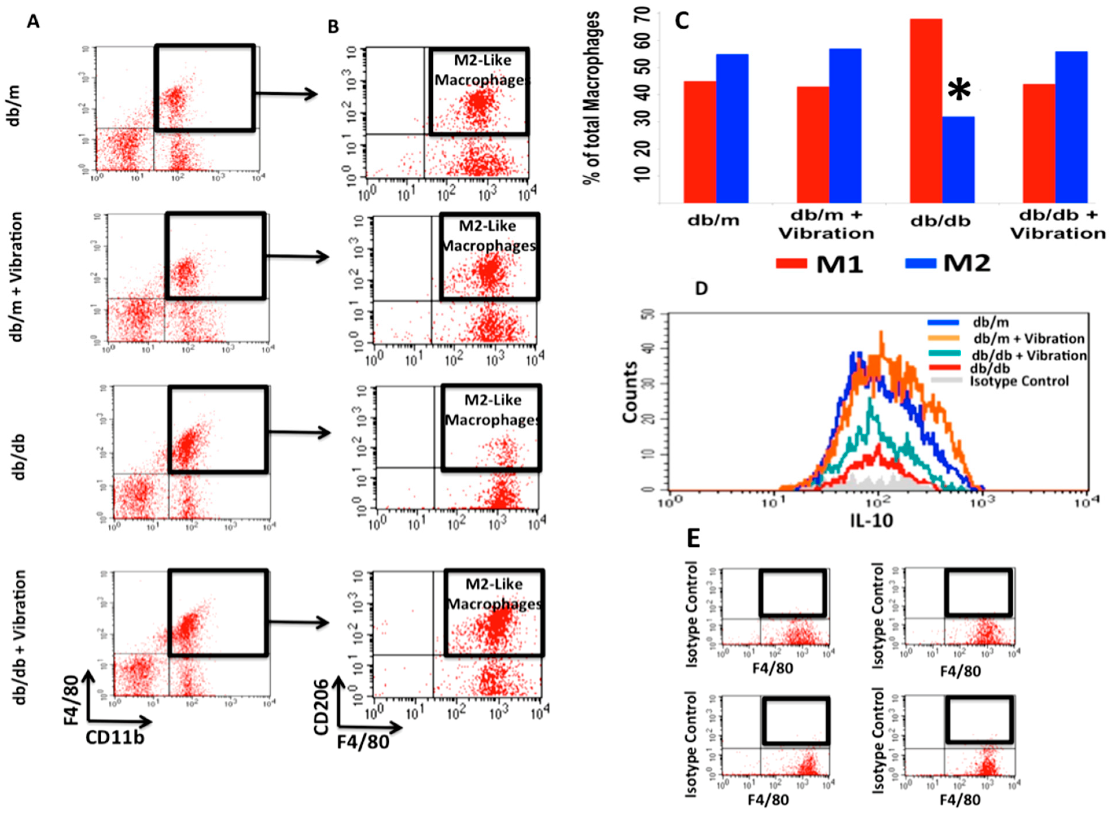 Whole Body Vibration-Induced Omental Macrophage Polarization and Fecal Microbiome Modification in a Murine Model