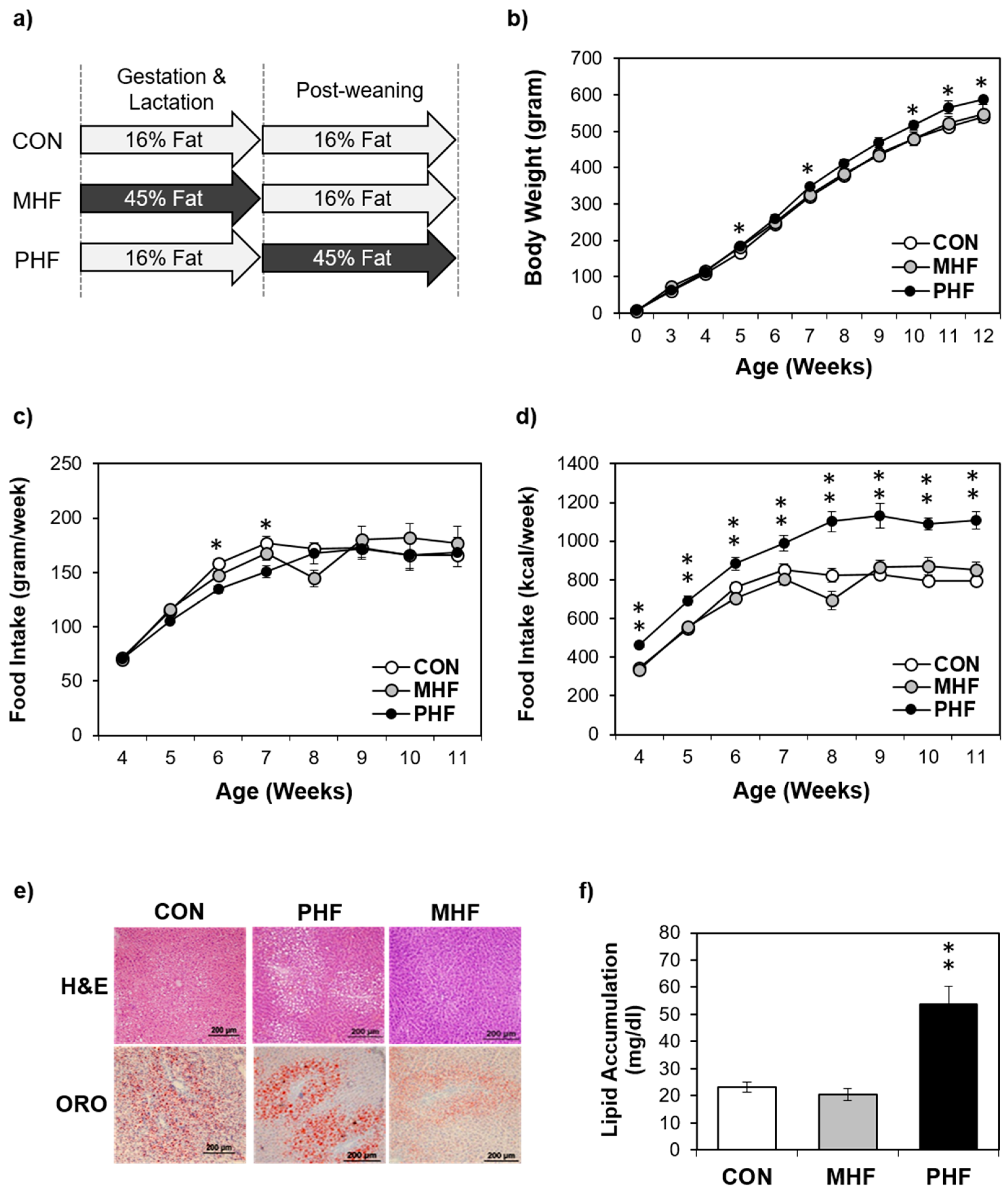 IJMS | Free Full-Text | Maternal and Post-Weaning High-Fat