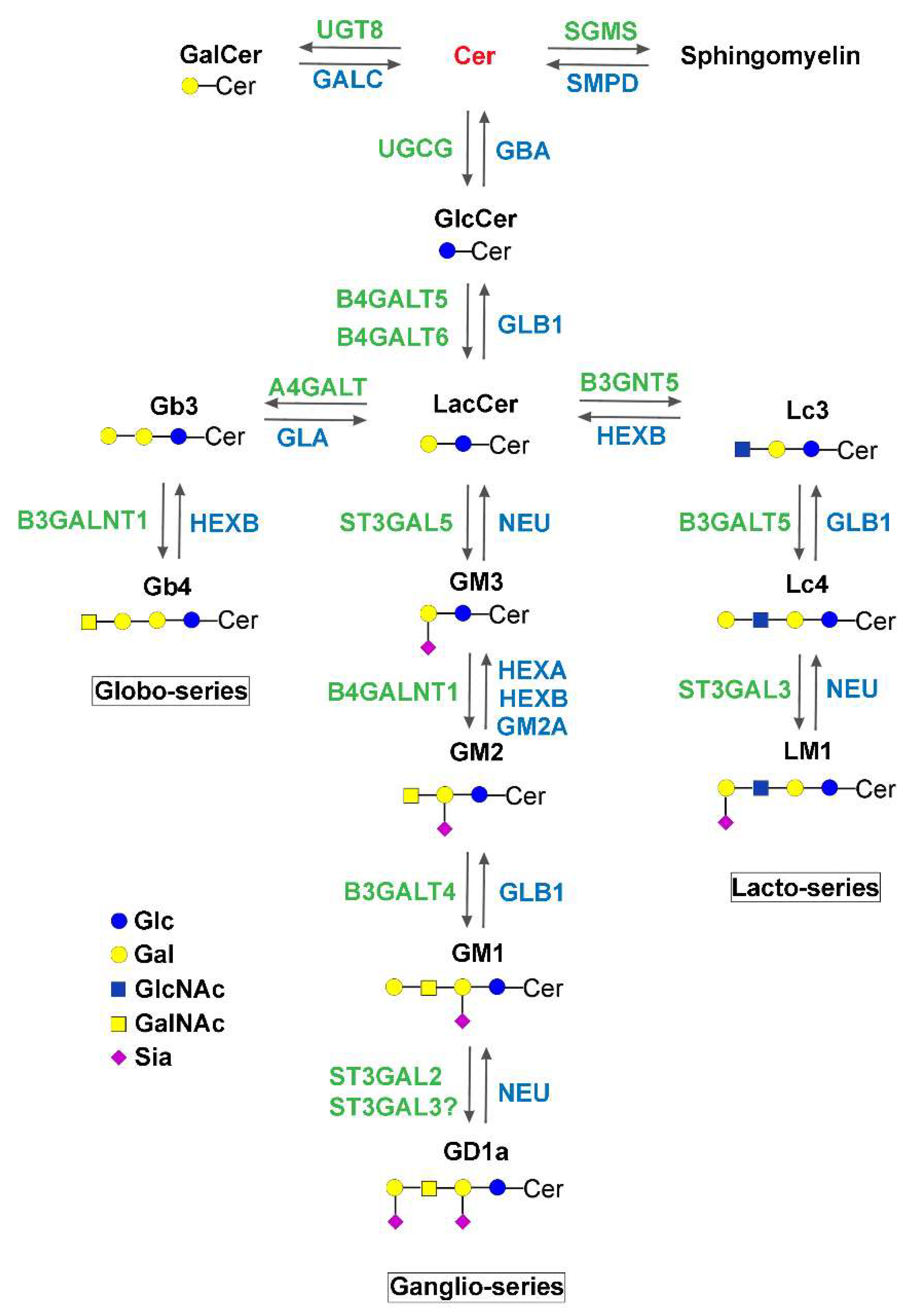 IJMS | Free Full-Text | The Link between Gaucher Disease and Parkinson's  Disease Sheds Light on Old and Novel Disorders of Sphingolipid Metabolism |  HTML