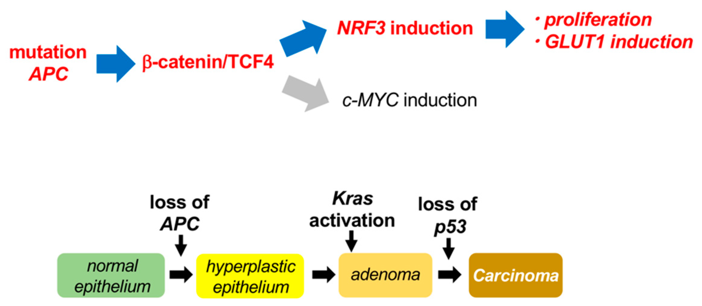 Ijms Free Full Text B Catenin Tcf4 Complex Mediated Induction Of The Nrf3 Nfe2l3 Gene In Cancer Cells Html