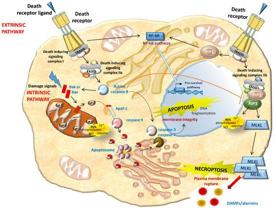 IJMS | Special Issue : Kidney Inflammation, Injury and
