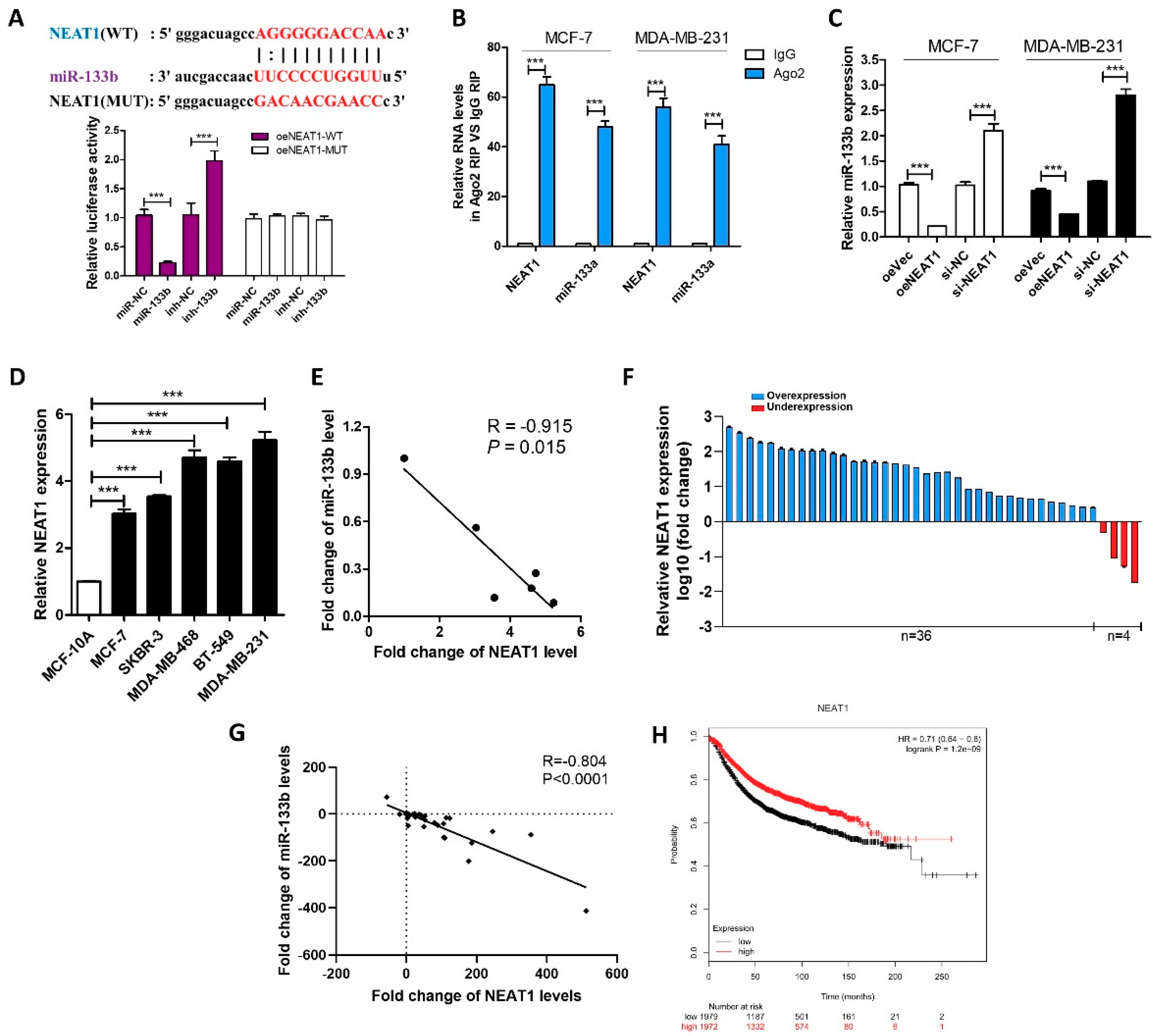 IJMS | Free Full-Text | LncRNA NEAT1 Silenced miR-133b Promotes