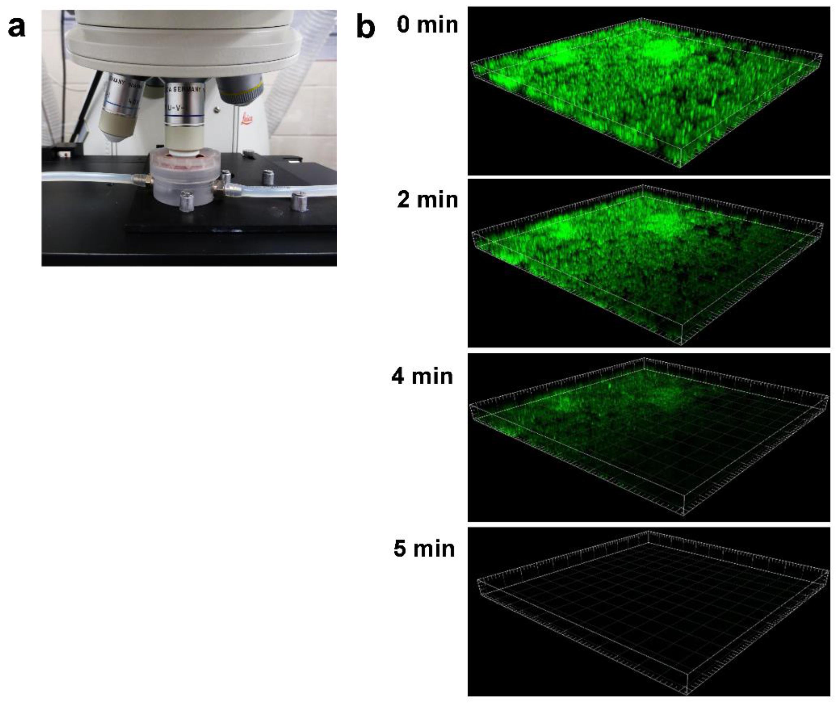 IJMS   Free Full-Text   Testing Anti-Biofilm Polymeric