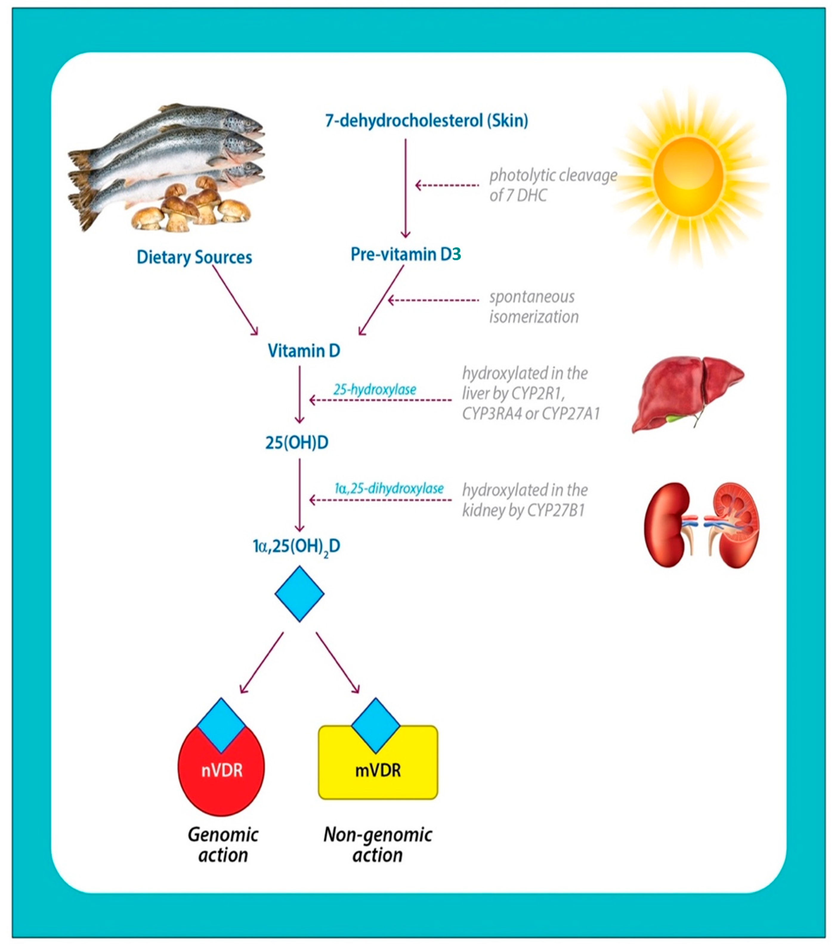 IJMS | Free Full-Text | A Narrative Role of Vitamin D and