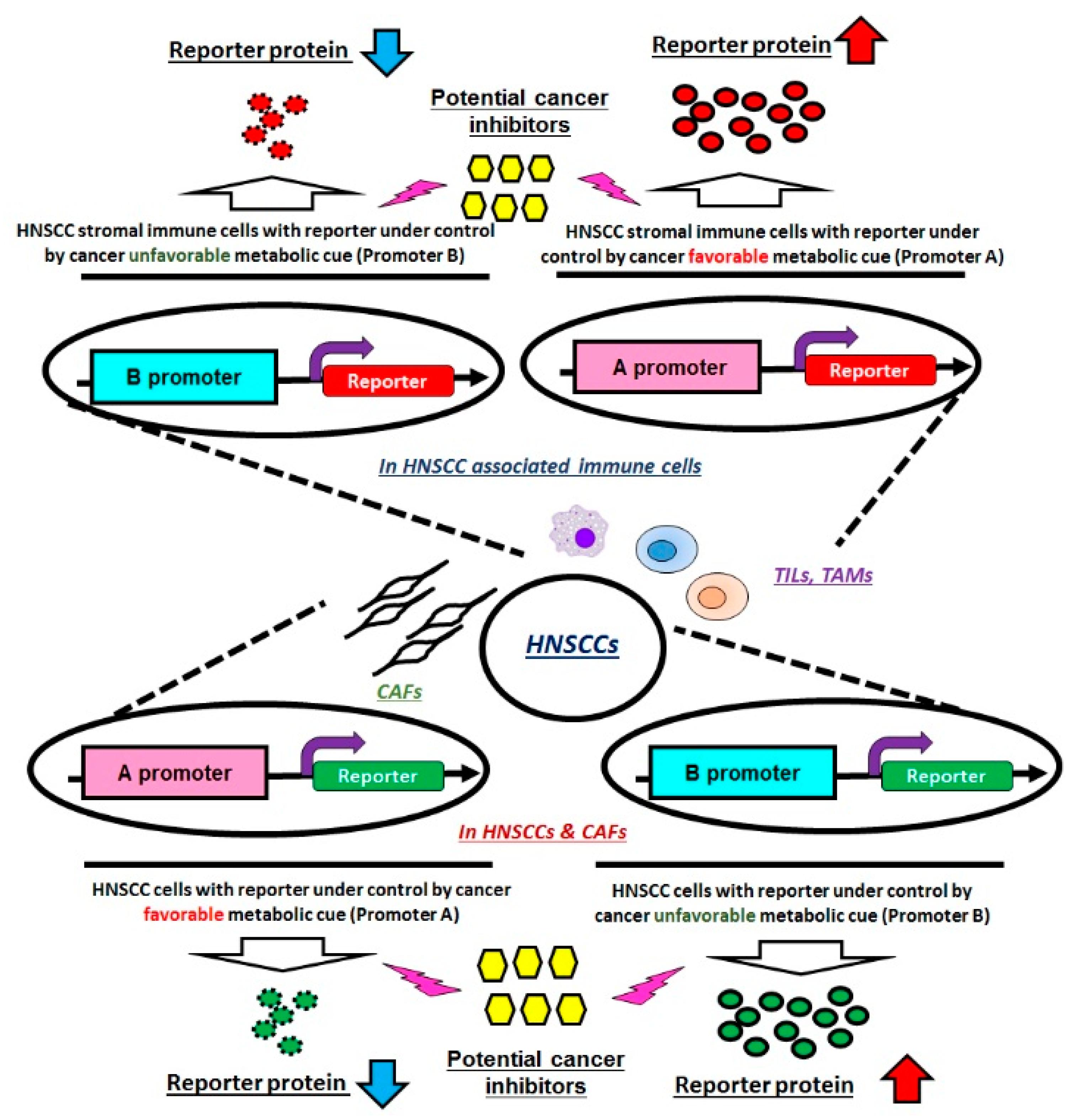 IJMS   Free Full-Text   Targeting Cellular Metabolism