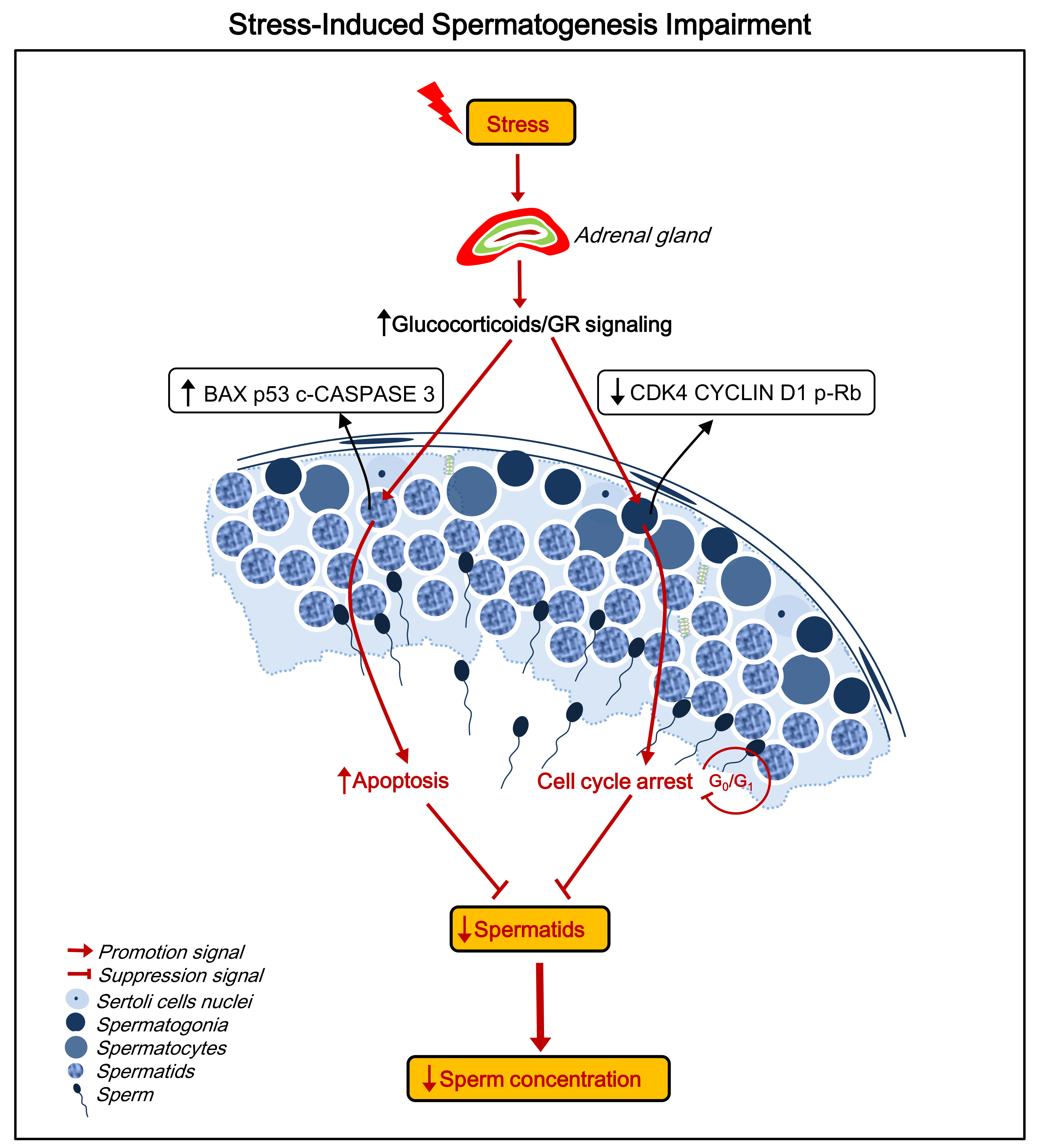 IJMS | Free Full-Text | Mechanisms of Stress-Induced