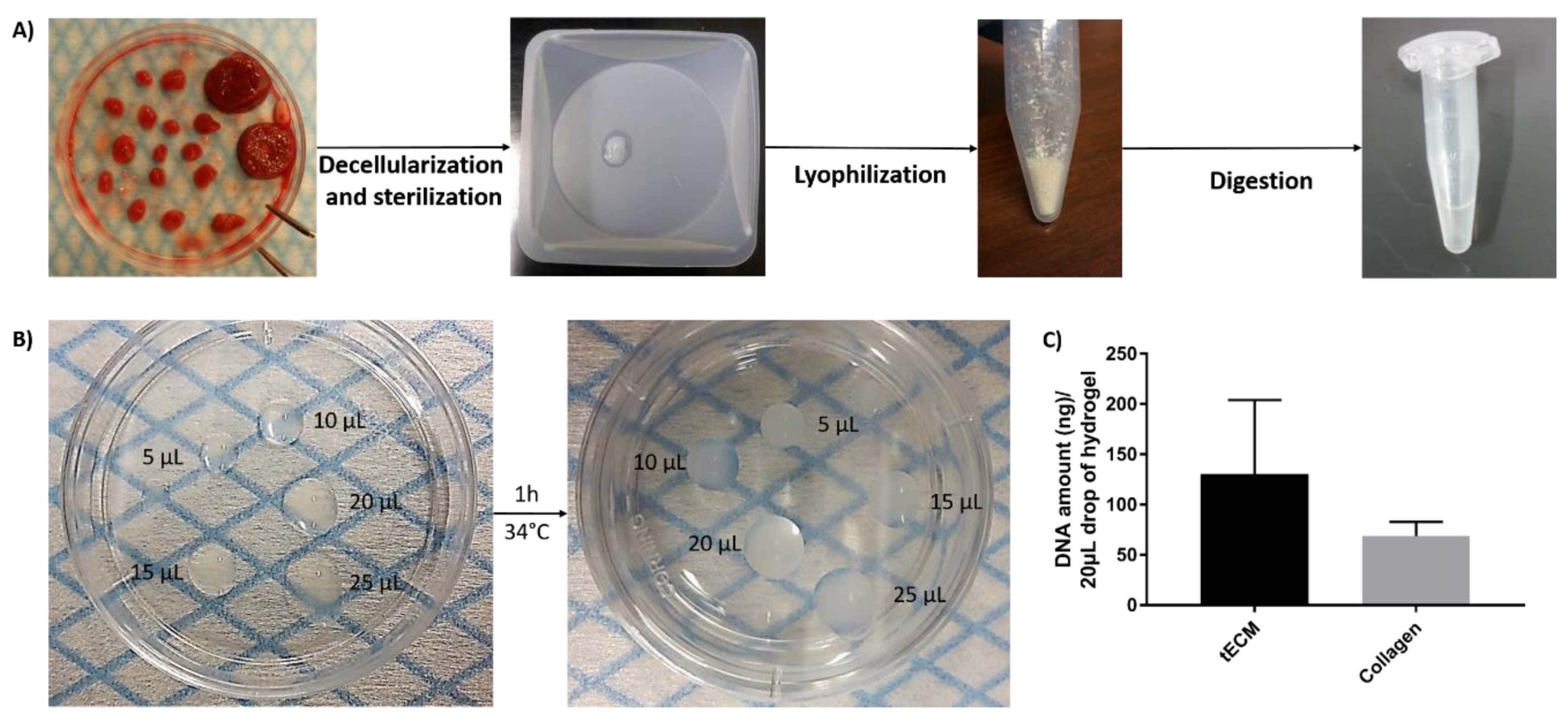 Ijms Free Full Text Generation Of Organized Porcine Testicular Organoids In Solubilized Hydrogels From Decellularized Extracellular Matrix Html