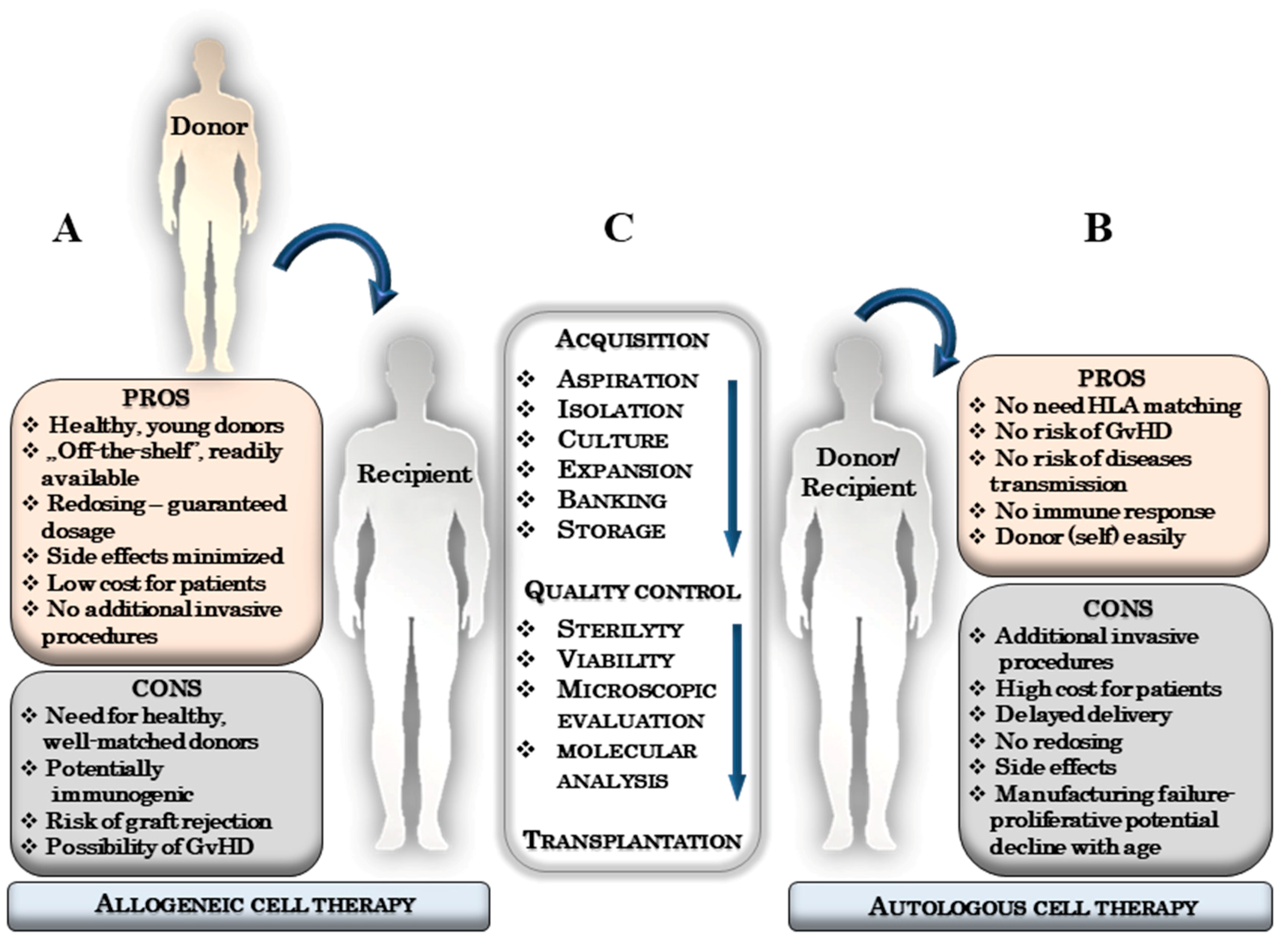 Ijms Free Full Text The Importance Of Hla Assessment In Off The Shelf Allogeneic Mesenchymal Stem Cells Based Therapies Html