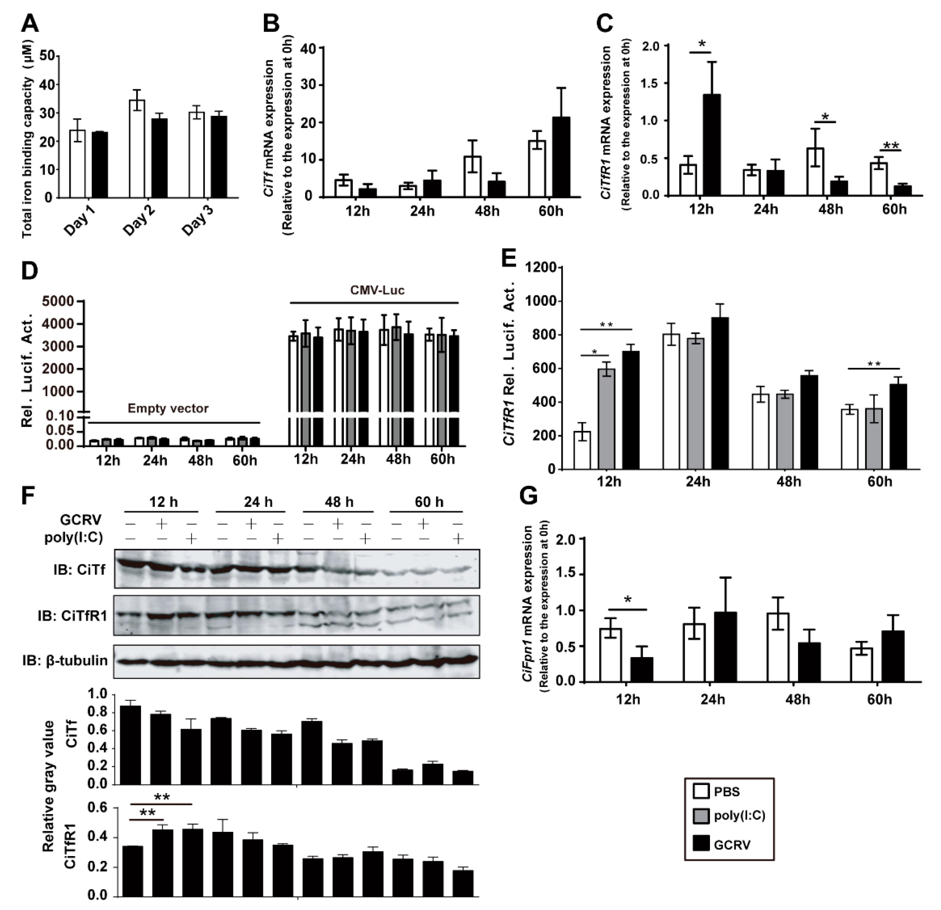 Transferrin Receptor 1-Associated