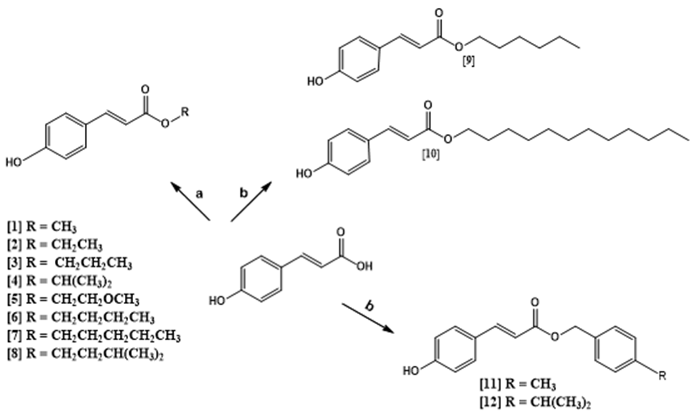 Ijms Free Full Text Trypanocidal Mechanism Of Action And