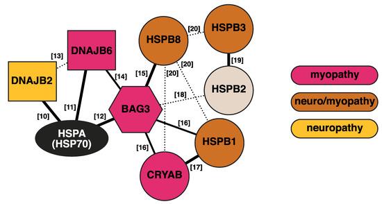 N2A and N2B Vintage University Dividing Networks