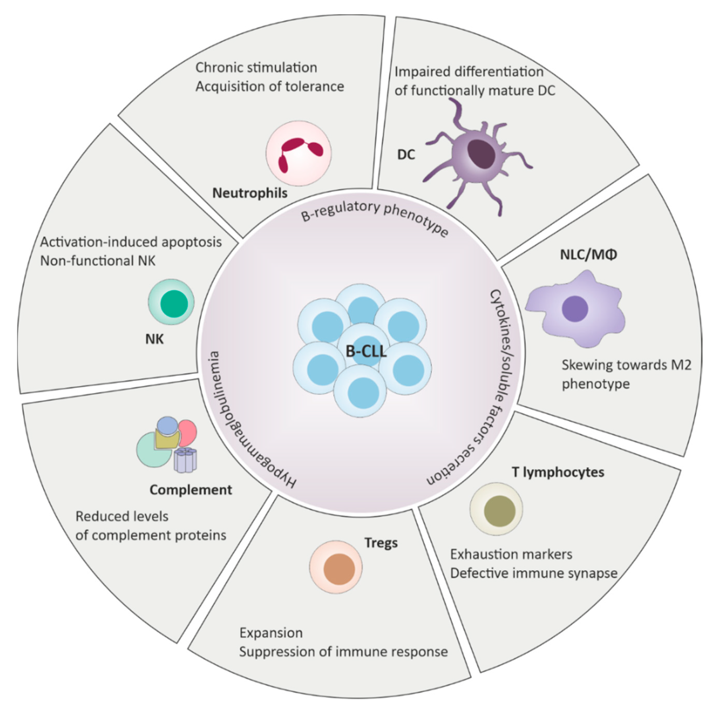 Il Mauro Del Camino ijms | free full-text | immune response dysfunction in