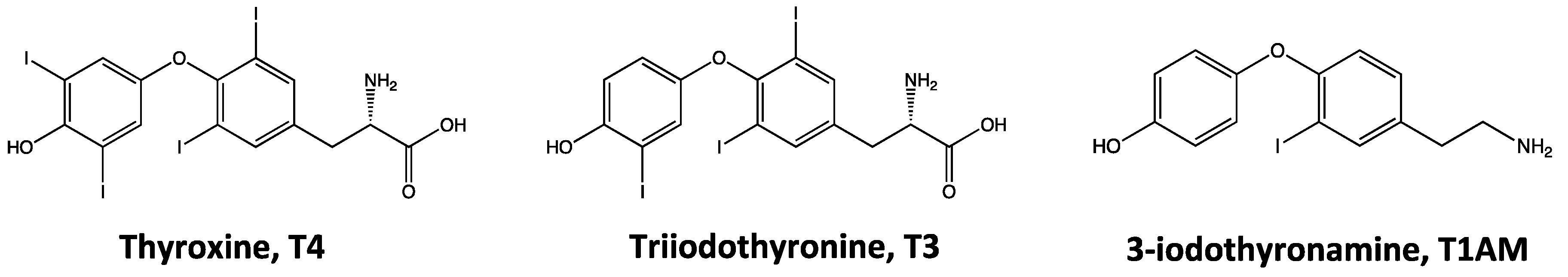 Ijms Free Full Text 3 Iodothyronamine And Derivatives New