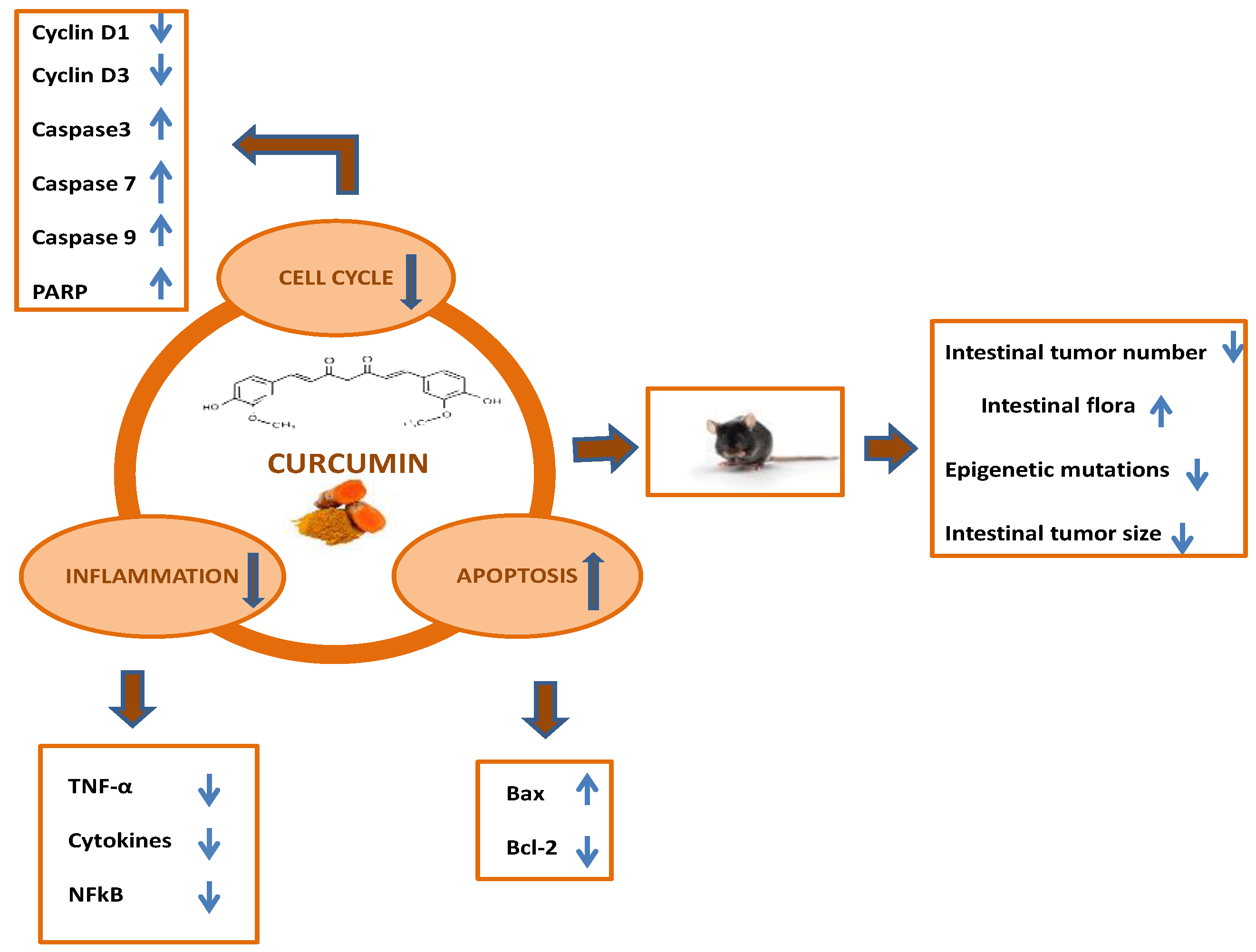 Ijms Free Full Text Curcumin And Colorectal Cancer From Basic To Clinical Evidences Html