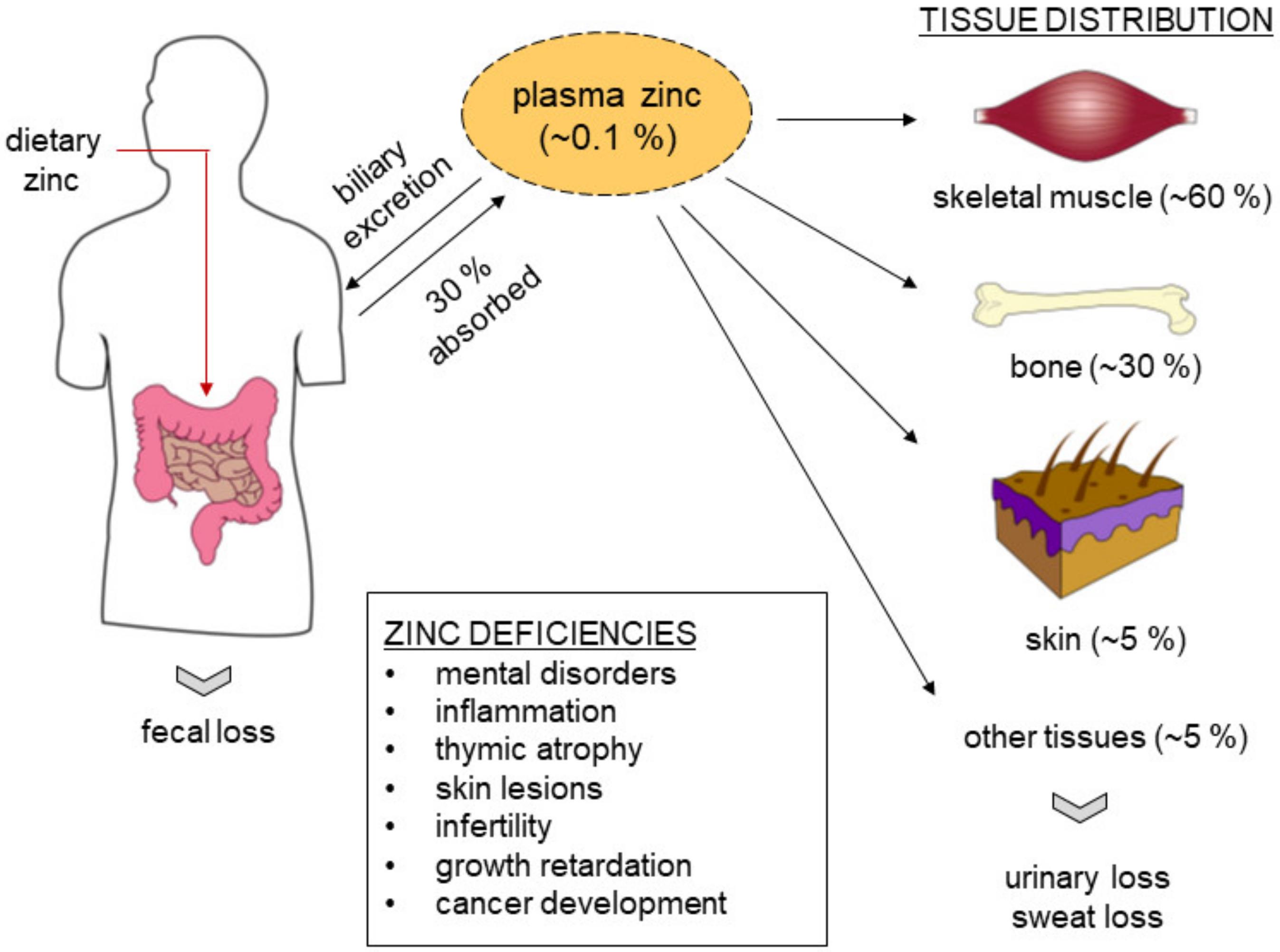 Tsinkit dragee - hivatalos használati utasítás - Egészség August