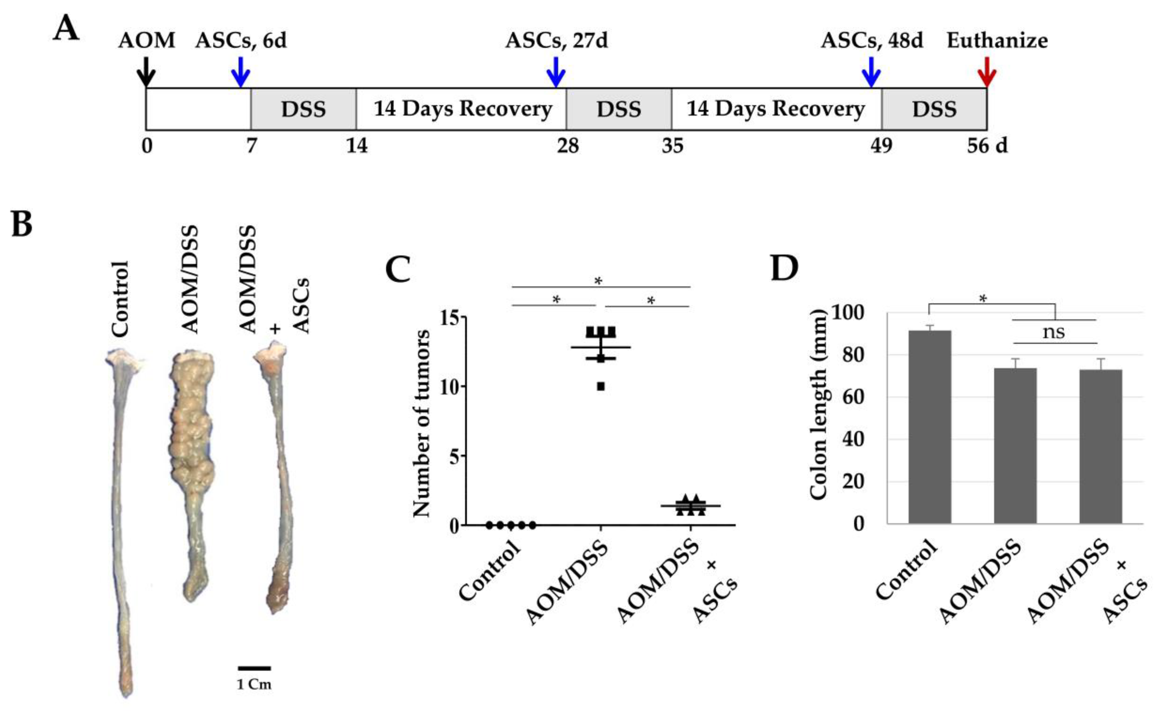 Ijms Free Full Text M1 Macrophages Promote Trail Expression In Adipose Tissue Derived Stem Cells Which Suppresses Colitis Associated Colon Cancer By Increasing Apoptosis Of Cd133 Cancer Stem Cells And Decreasing M2 Macrophage