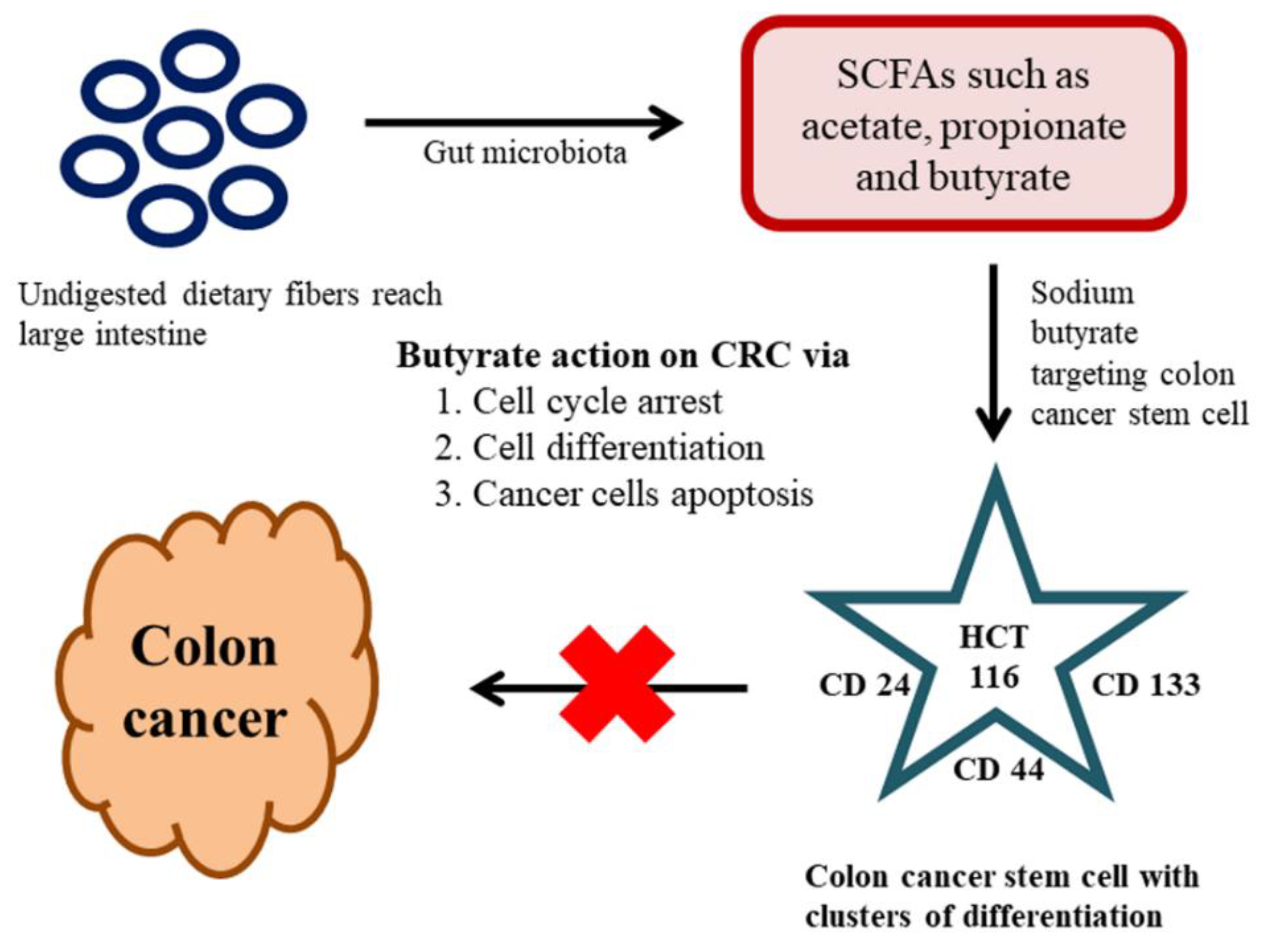 Ijms Free Full Text Diet Derived Phytochemicals Targeting Colon Cancer Stem Cells And Microbiota In Colorectal Cancer