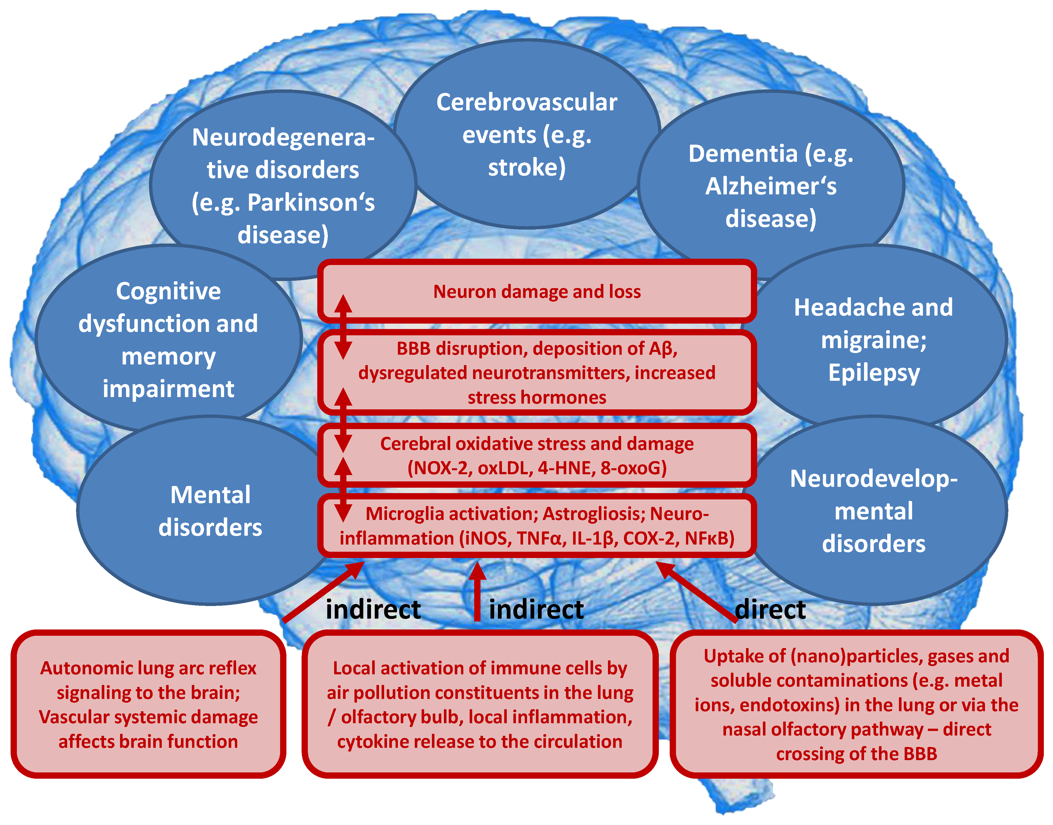 Ijms Free Full Text Ambient Air Pollution Increases The Risk Of Cerebrovascular And Neuropsychiatric Disorders Through Induction Of Inflammation And Oxidative Stress Html