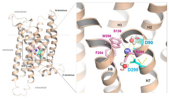 Ijms Free Full Text Structural Complexity And Plasticity Of Signaling Regulation At The Melanocortin 4 Receptor Html